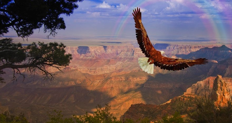 Картинка: Птица, орлан, орёл, летит, крылья, хищник, высота, радуга, небо, каньон