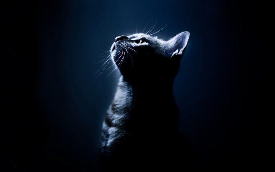 Картинка: Кошка, морда, усы, профиль, смотрит