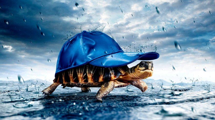 Картинка: Черепаха, панцирь, кепка, дождь, капли, укрытие, идёт