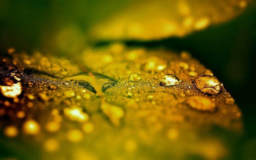 Картинка: Капли, лист, фокус, вода