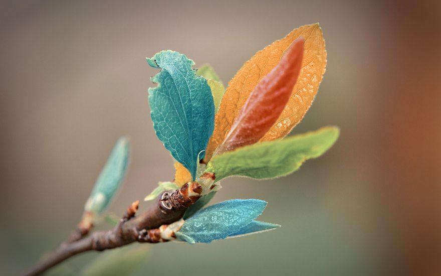 Картинка: Листья, разноцветные, ветка, голубой, зелёный, оранжевый, красный, цвет, размытость