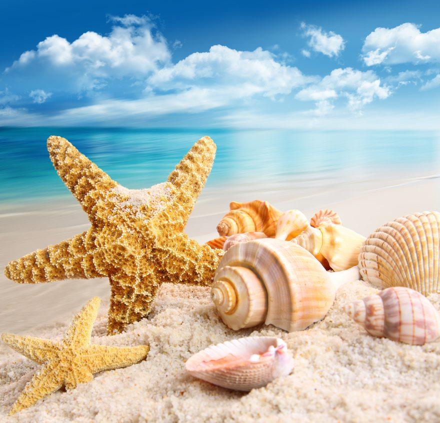 Картинка: Море, песок, отдых, морская звезда, ракушки, небо