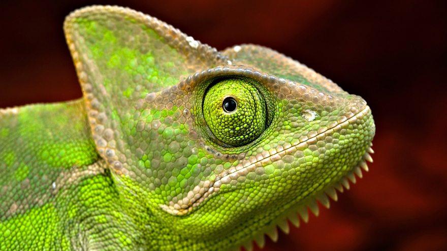 Картинка: Хамелеон, глаз, чешуя, кожа, зелёный