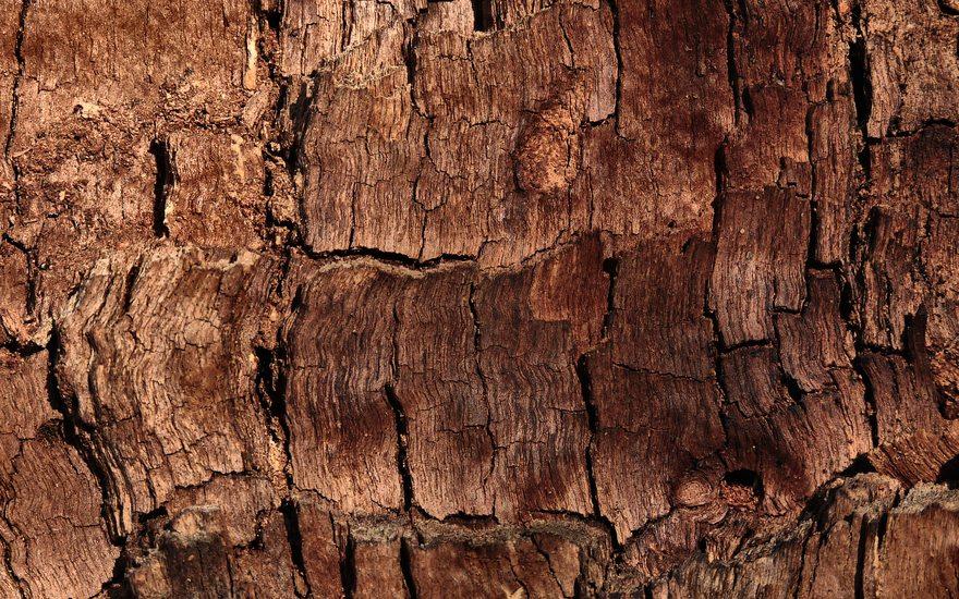 Картинка: Кора, дерево, коричневый, шероховатость, фон