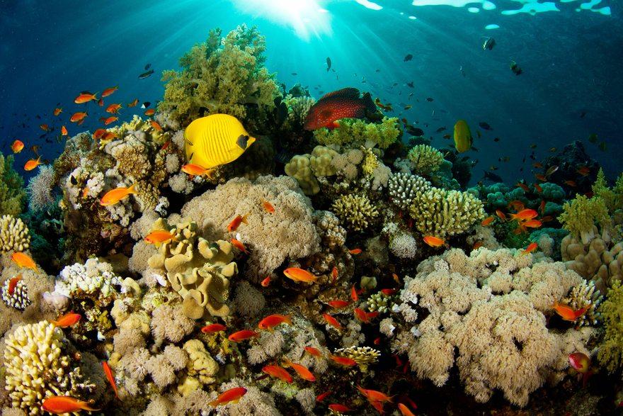 Картинка: Под водой, рыбы, кораллы, риф, поверхность, лучи