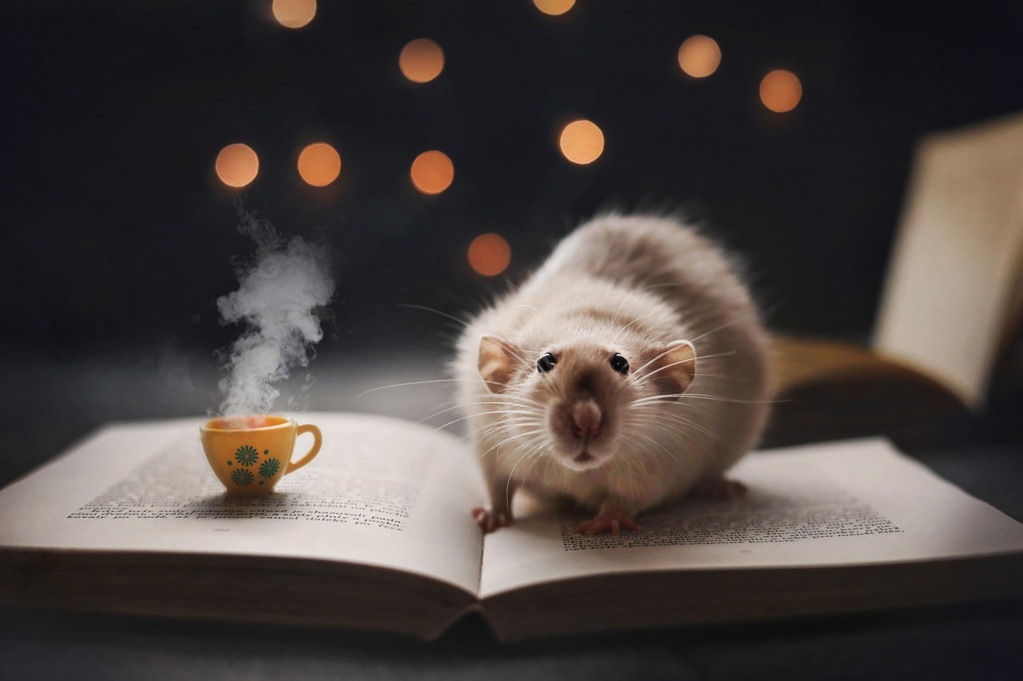 Картинка: Крыса, книга, кружка, боке