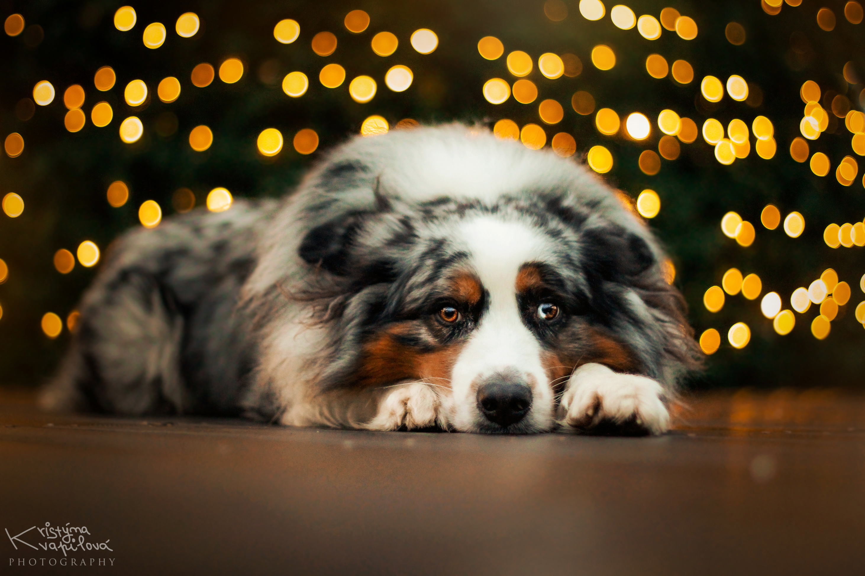 Image: Dog, lies, bokeh, lights