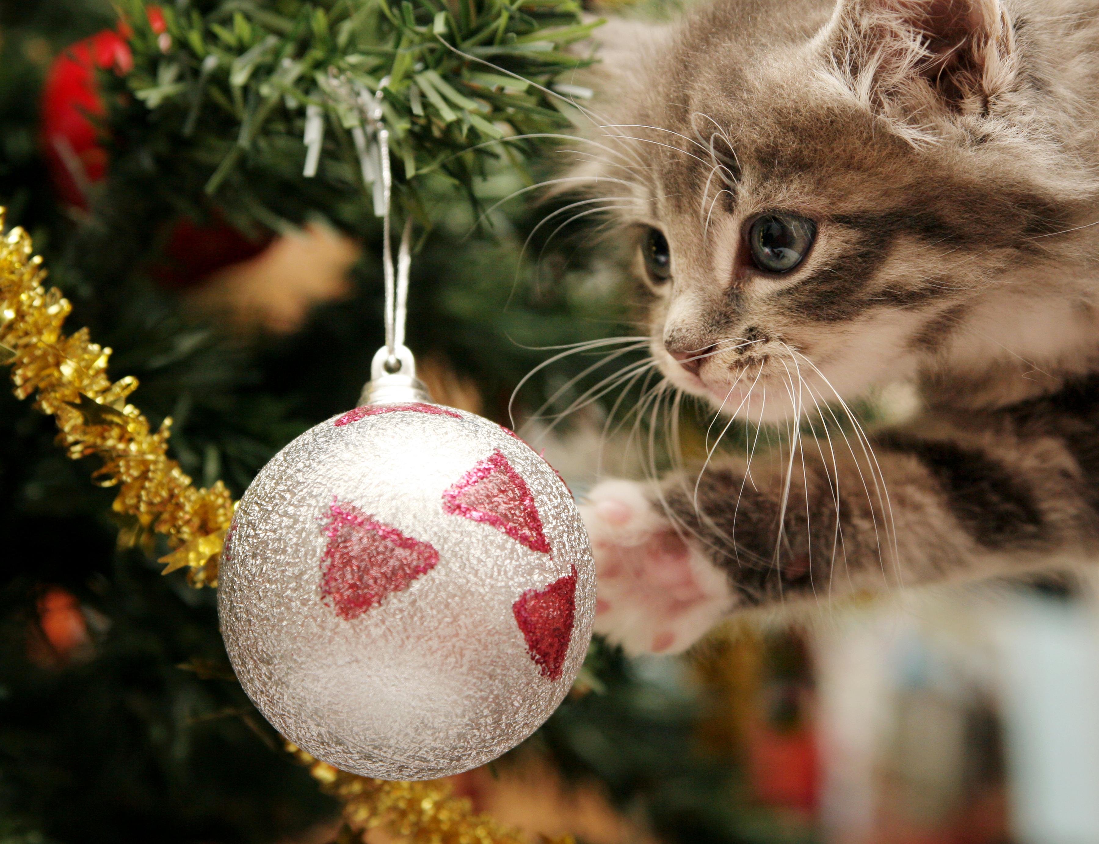 Картинка: Котёнок, игрушка, шар, игра, ёлка