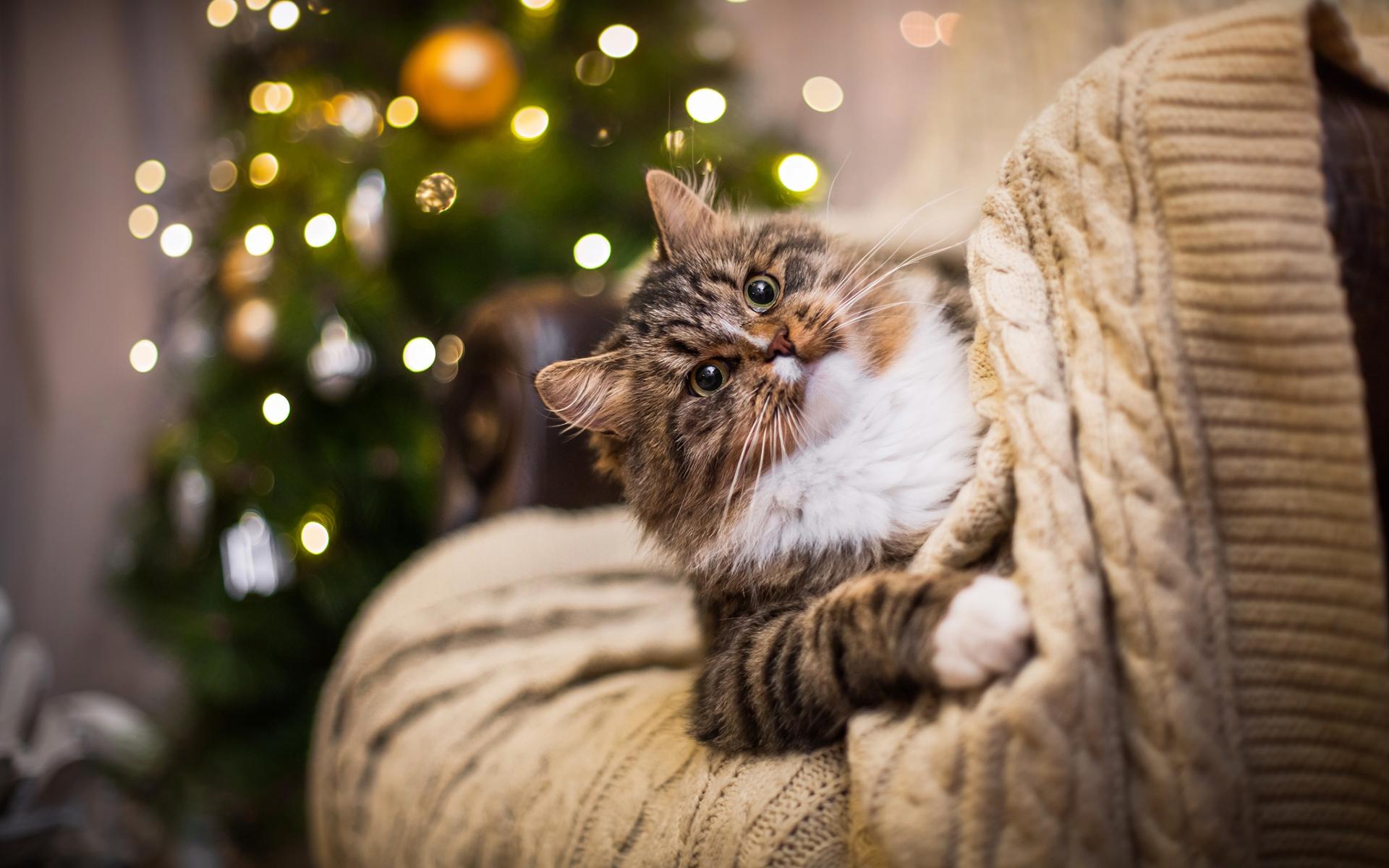 Картинка: Кошка, взгляд, свитер, блики, ёлка