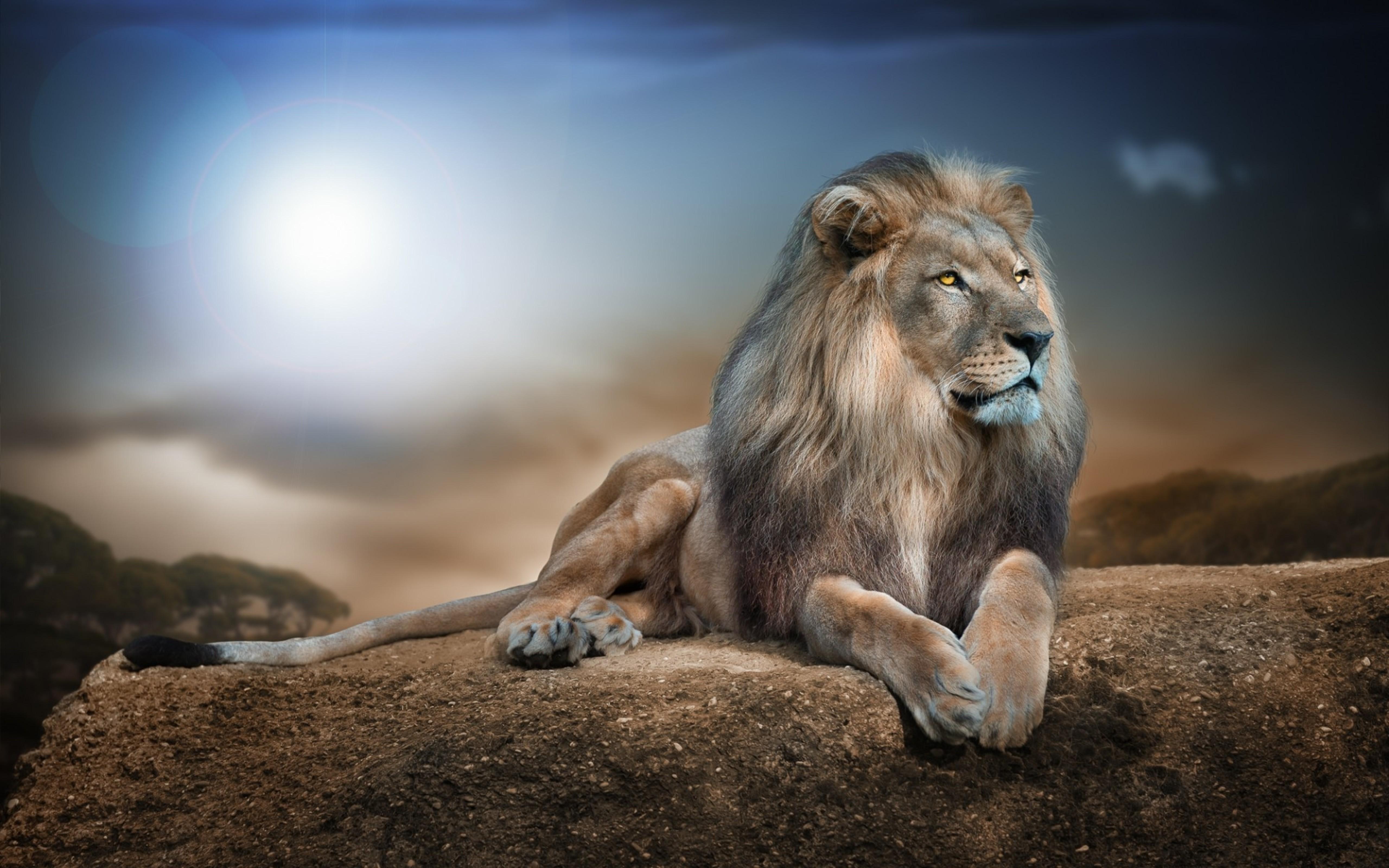 Image: Lion, predator, mane, muzzle, head, eyes, view, feet, tail, lie, hills, sky, lie