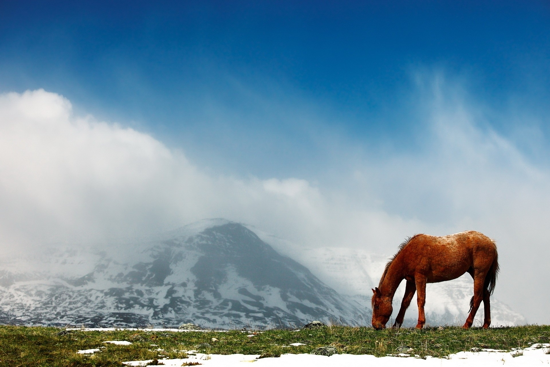 Image: Horse, field, grass, snow, sky, mountain, clouds, fog