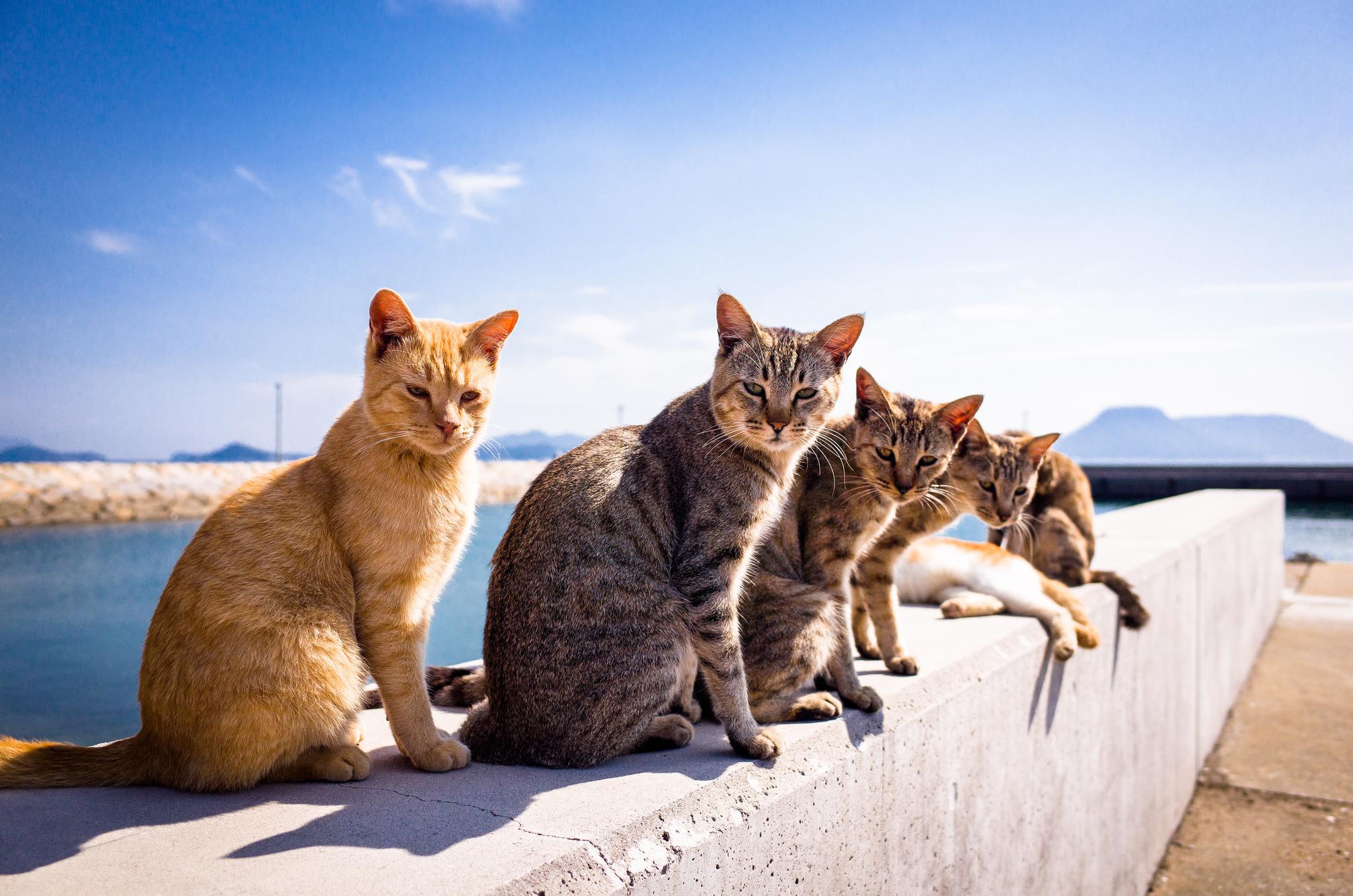 Картинка: Шесть, кошки, смотрят, тень, небо, греются, сидят