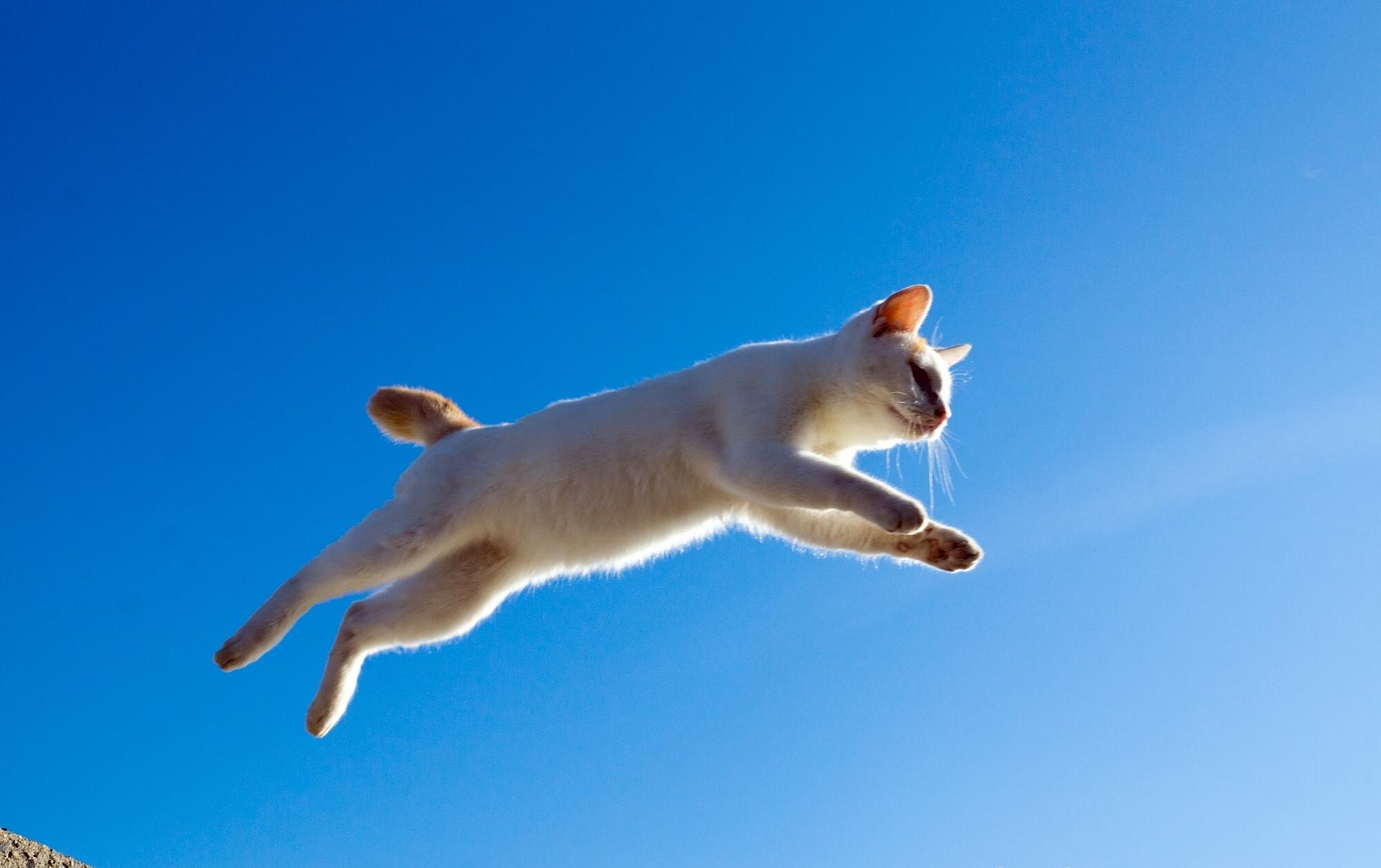 Картинка: Кошка, прыжок, небо, высота