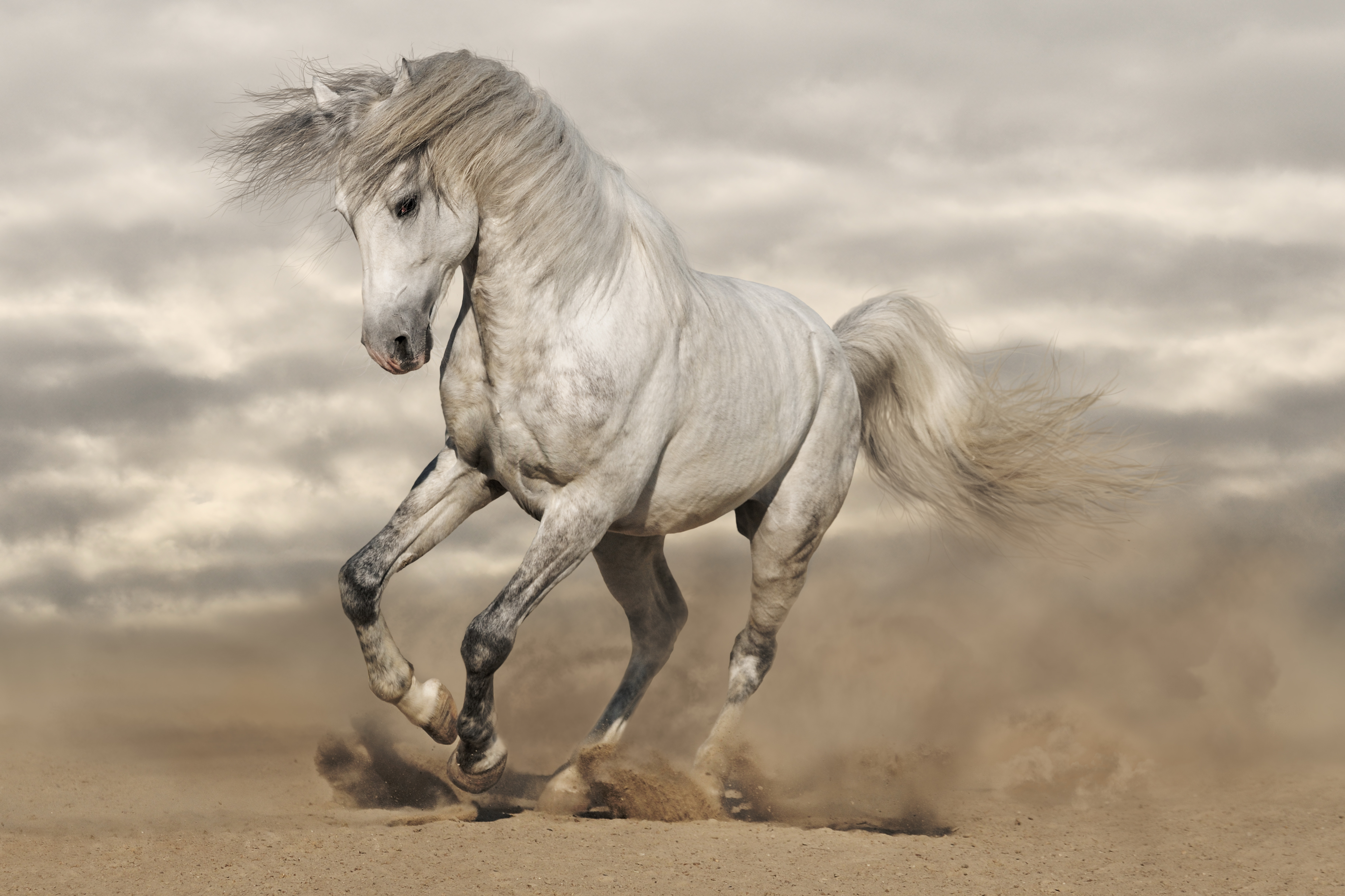 Картинка: Лошадь, белая, грация, песок, пыль, галоп, манёвр, облака