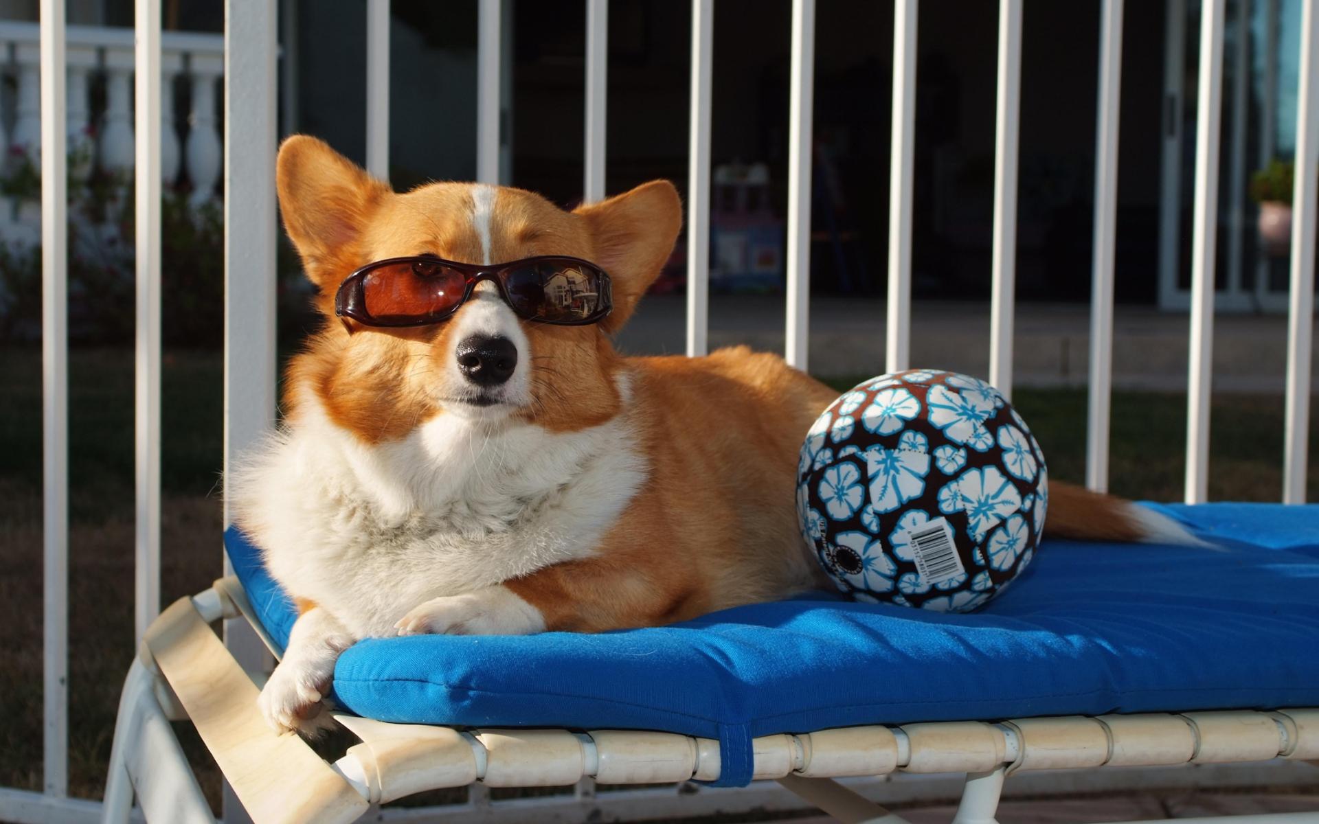 Image: Dog, glasses, ball, lies