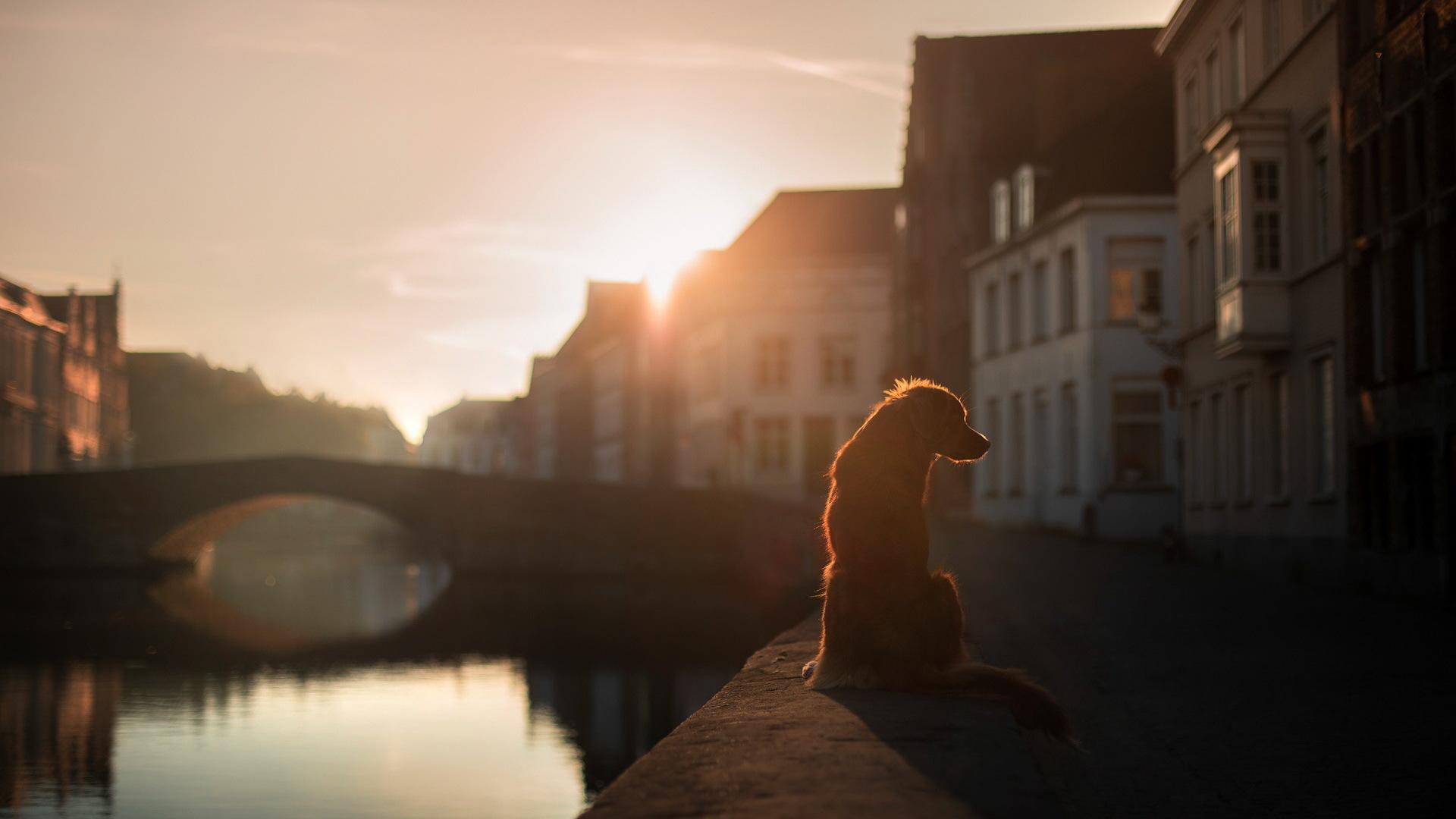 Картинка: Собака, сидит, закат, вода, мост, дома, улица