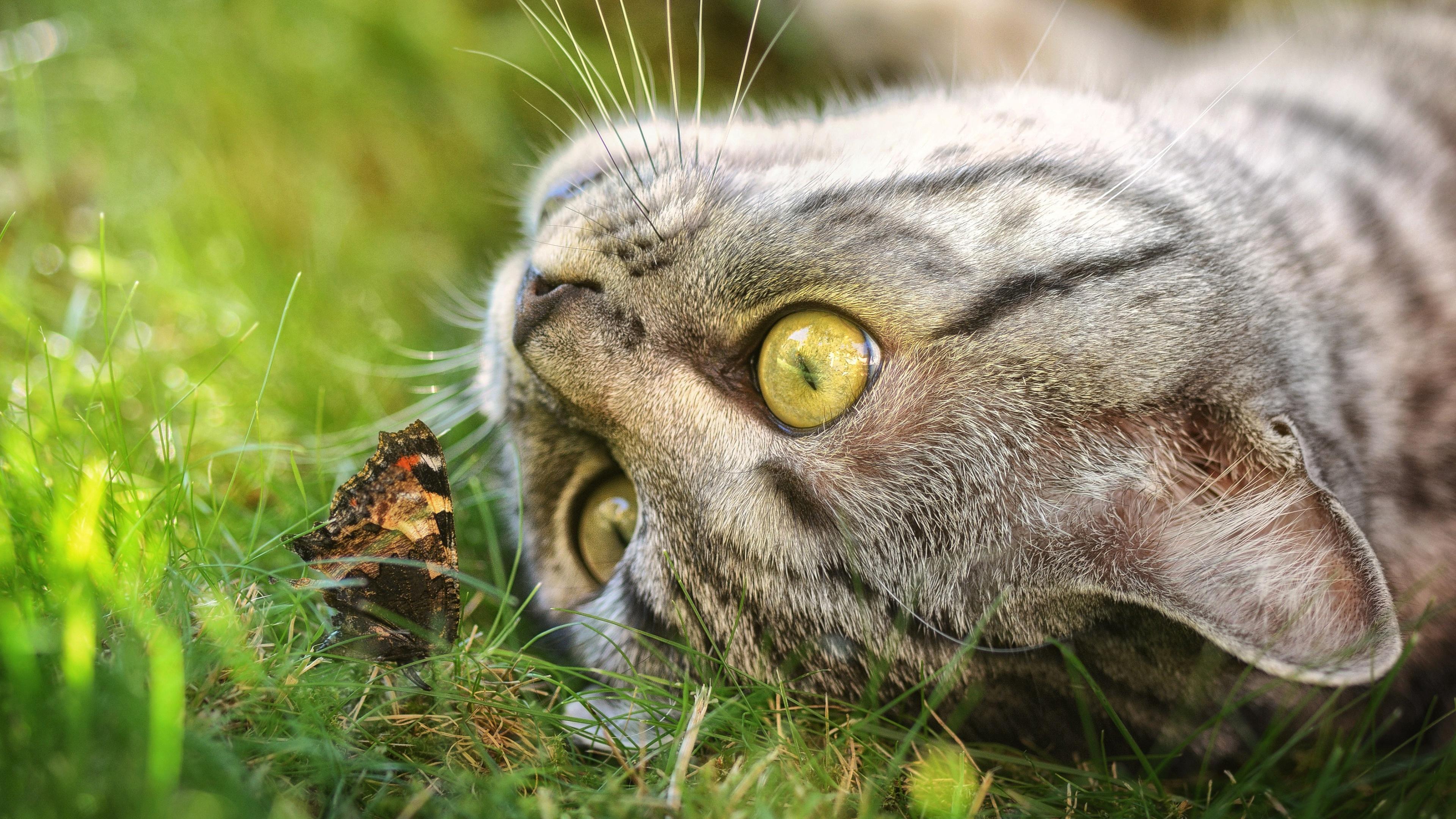 Картинка: Кошка, серая, трава, морда, бабочка