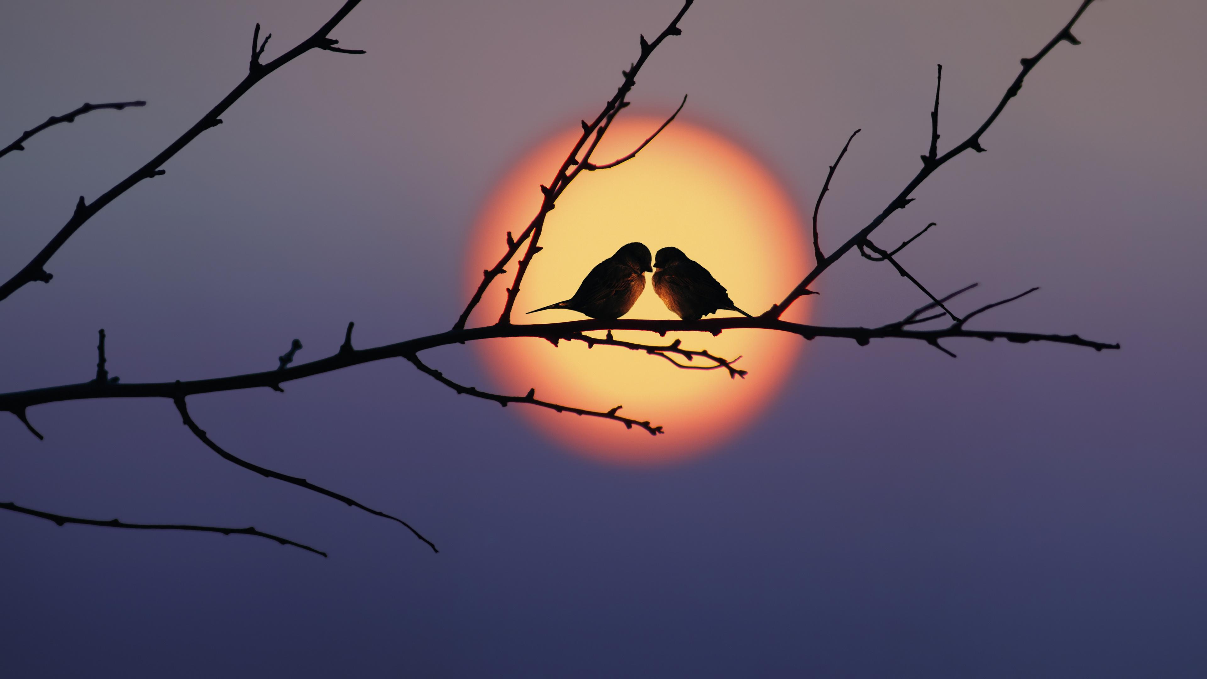 Картинка: Птицы, пара, на ветке, закат, вечер, солнце