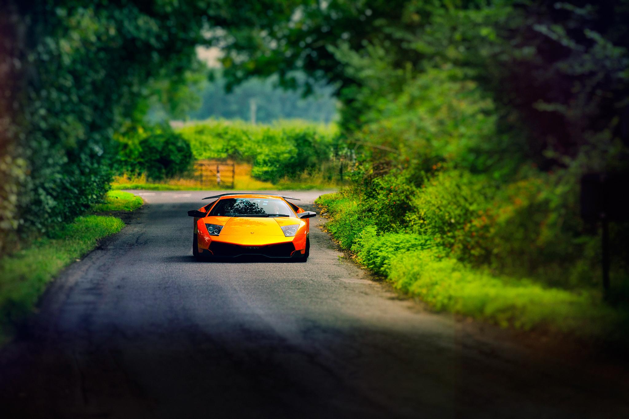 Картинка: Lamborghini, Murcielago, оранжевый, дорога, деревья
