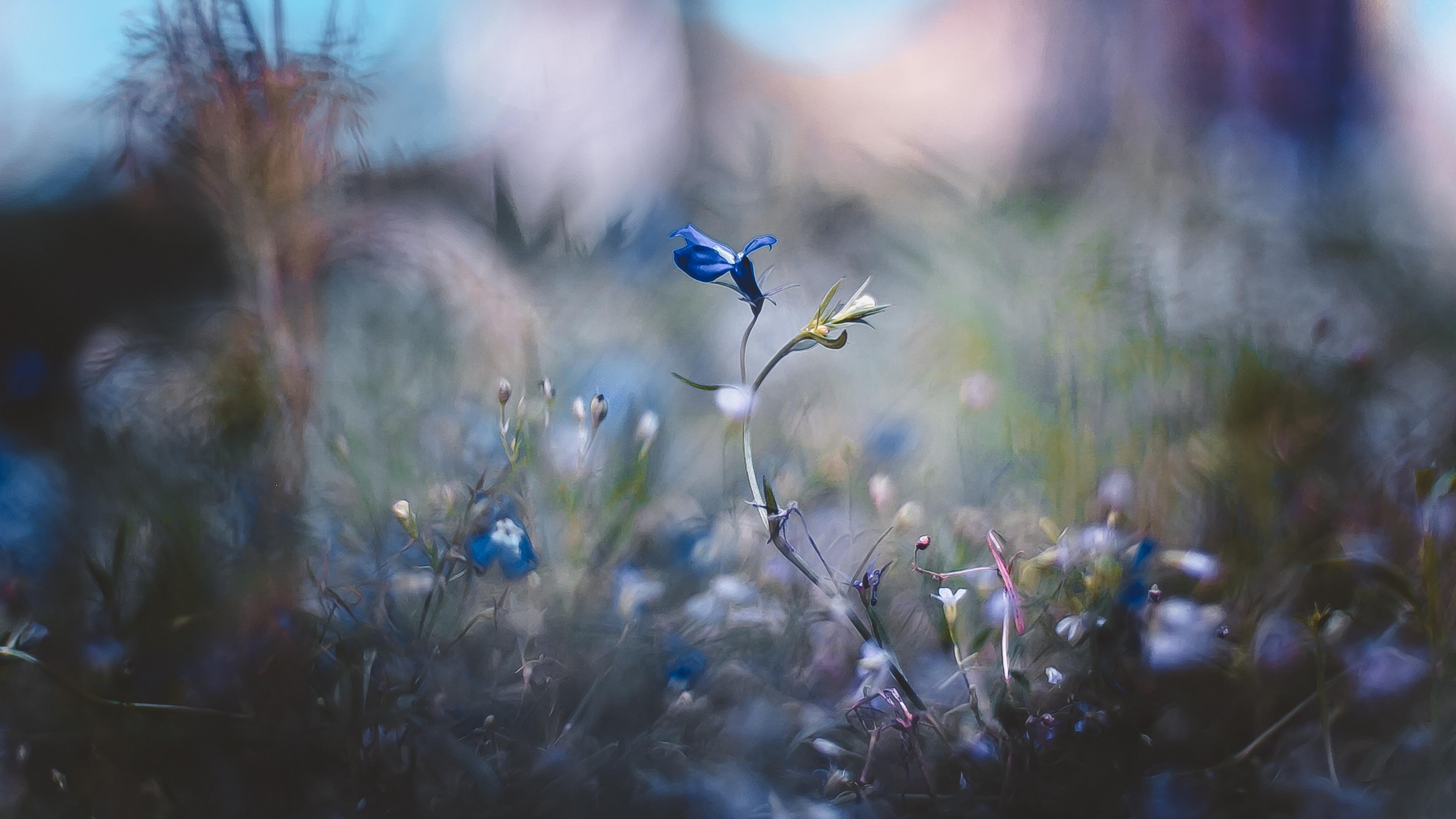 Картинка: цветы, растения, трава, размытость, фильтр, эффект