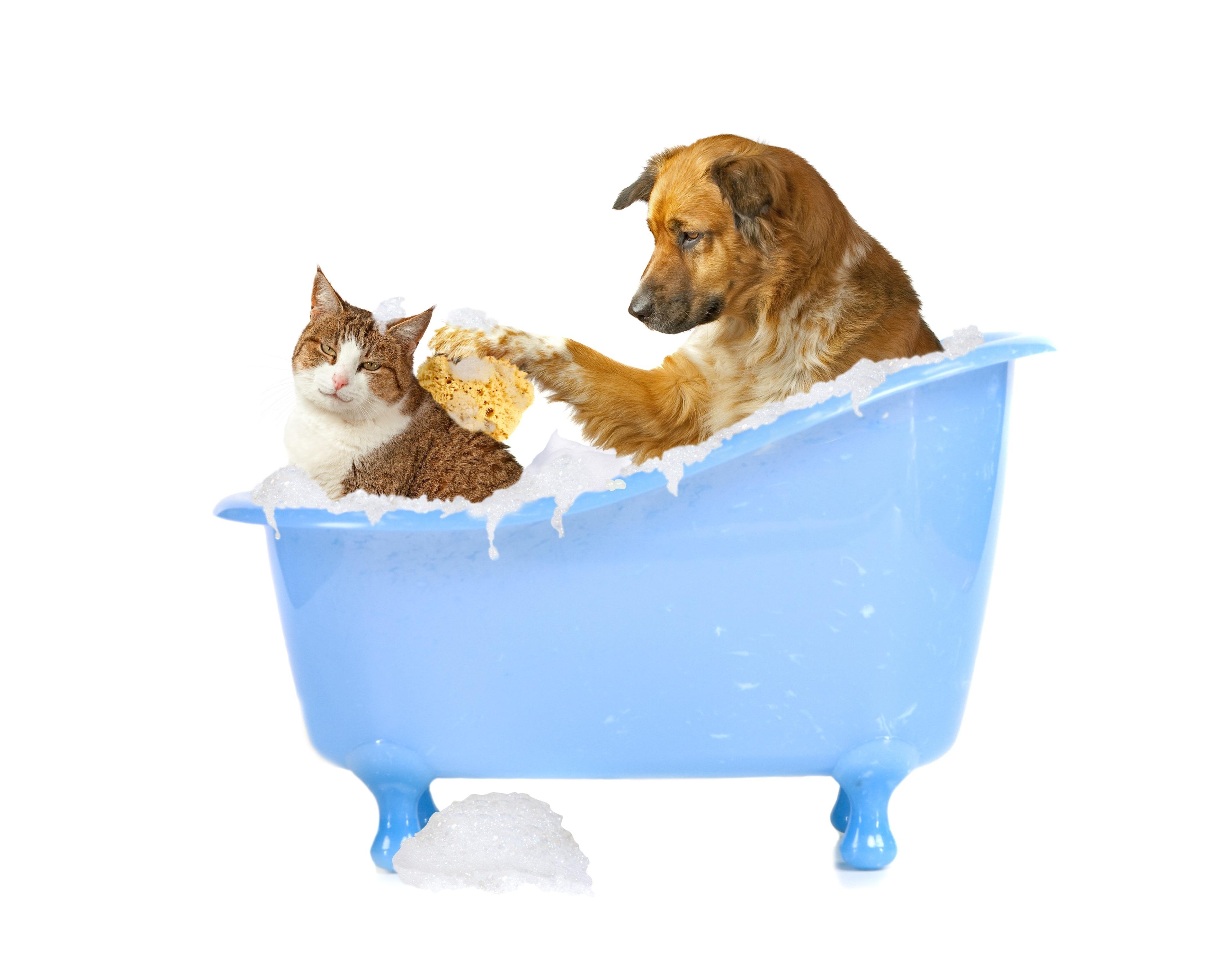 Image: Animals, dog, cat, bath, wash, white background