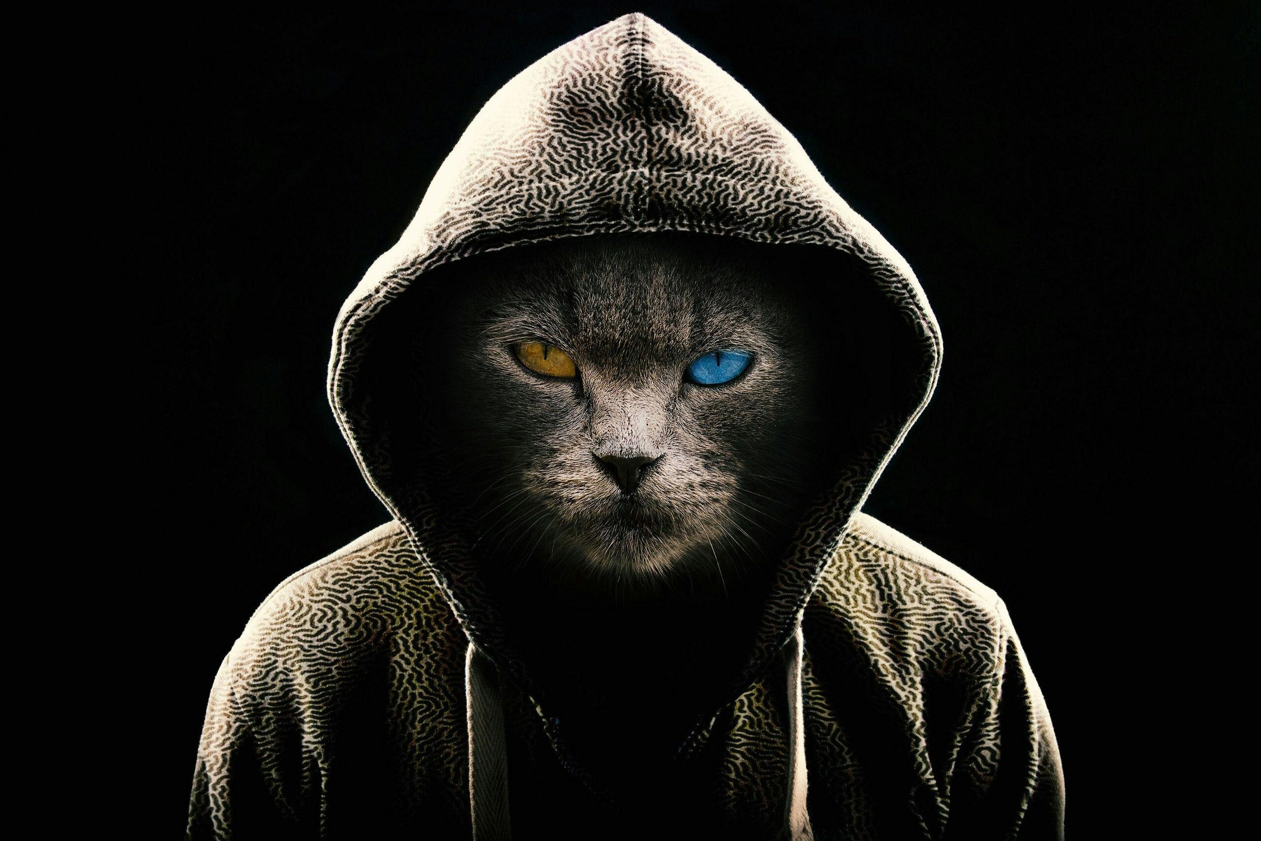 Картинка: Кот, капюшон, разные глаза, морда, чёрный фон
