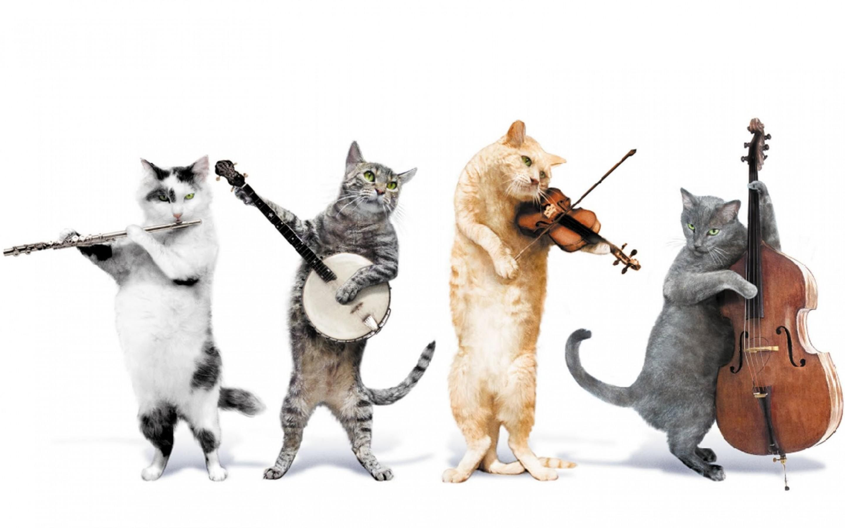 Image: Cats, playing, musical instruments, background