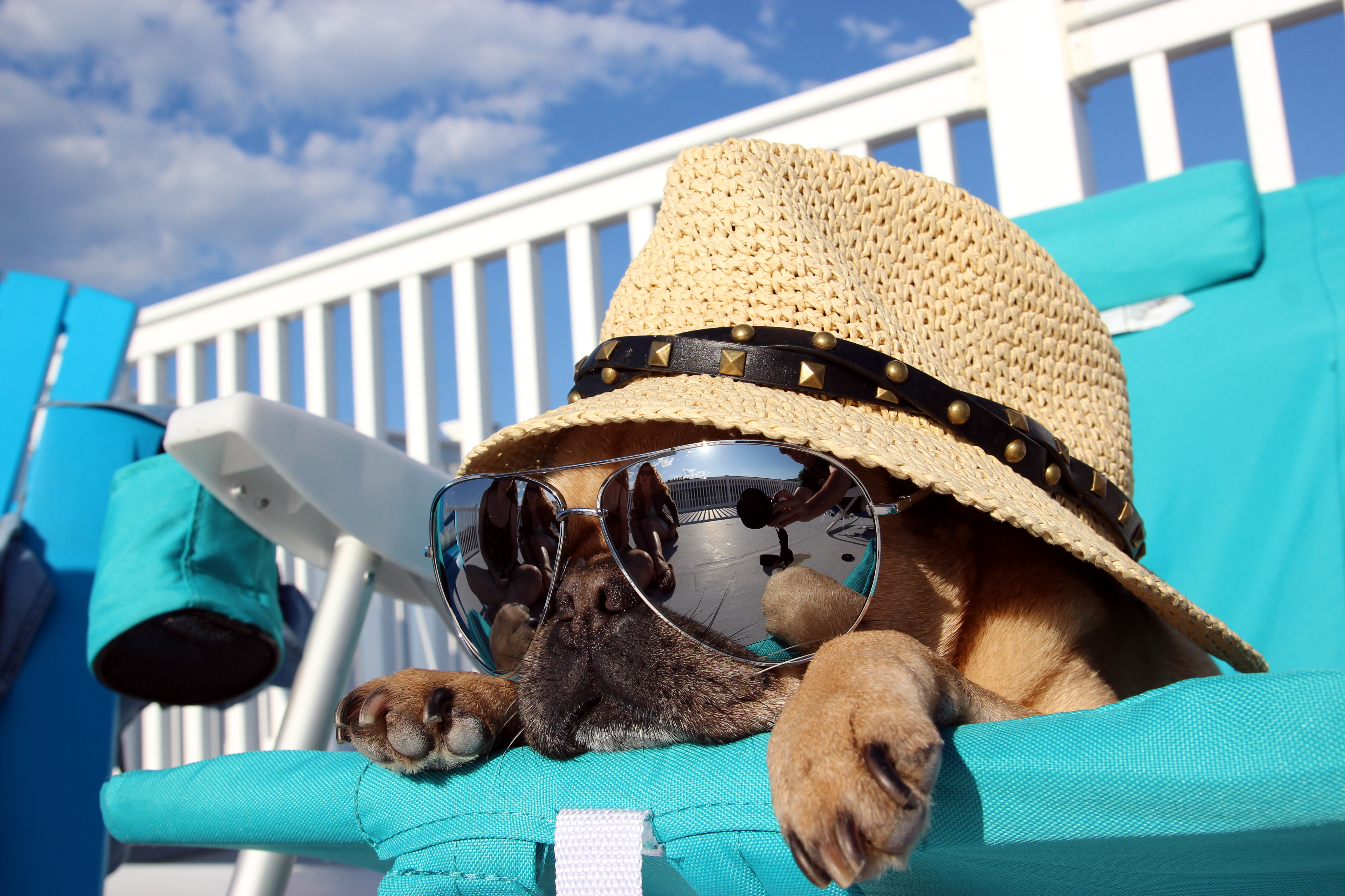 Image: Dog, hat, glasses, reflection, lies, sunbed, vacation, sky, clouds