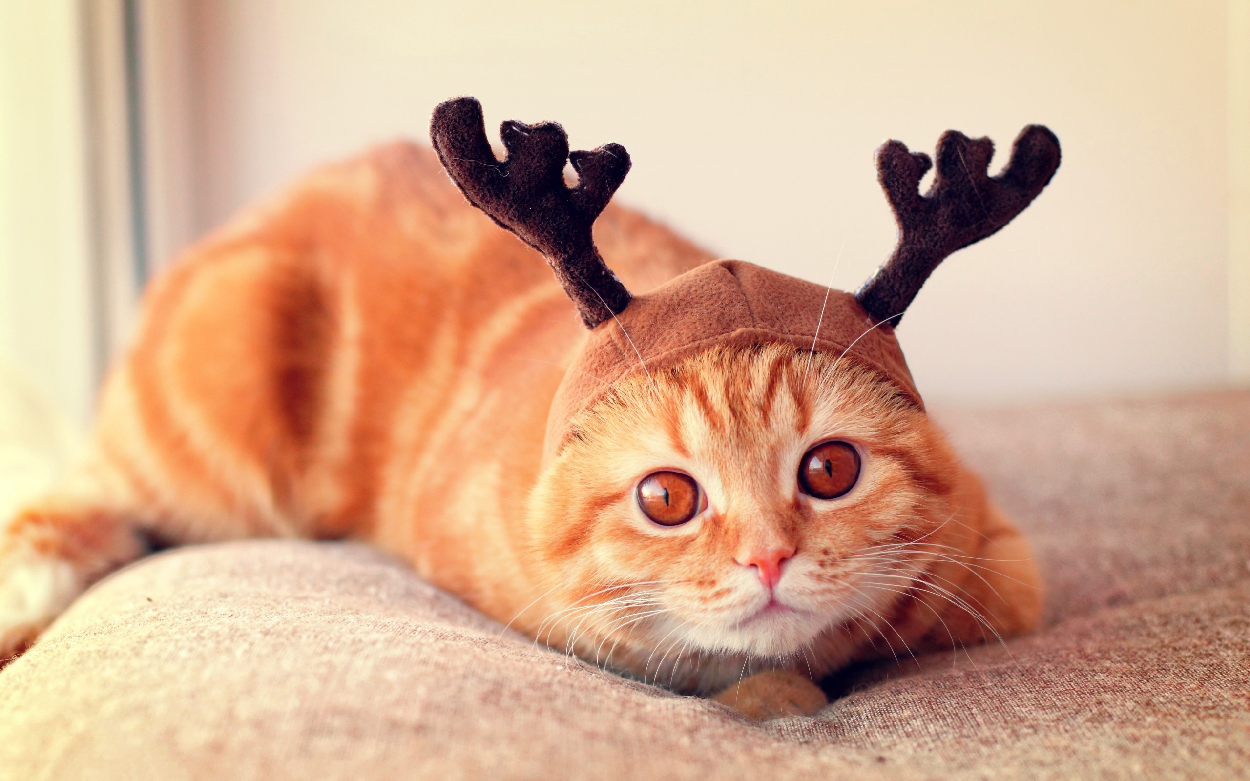 Image: Cat, red, eyes, hat, horns, scared