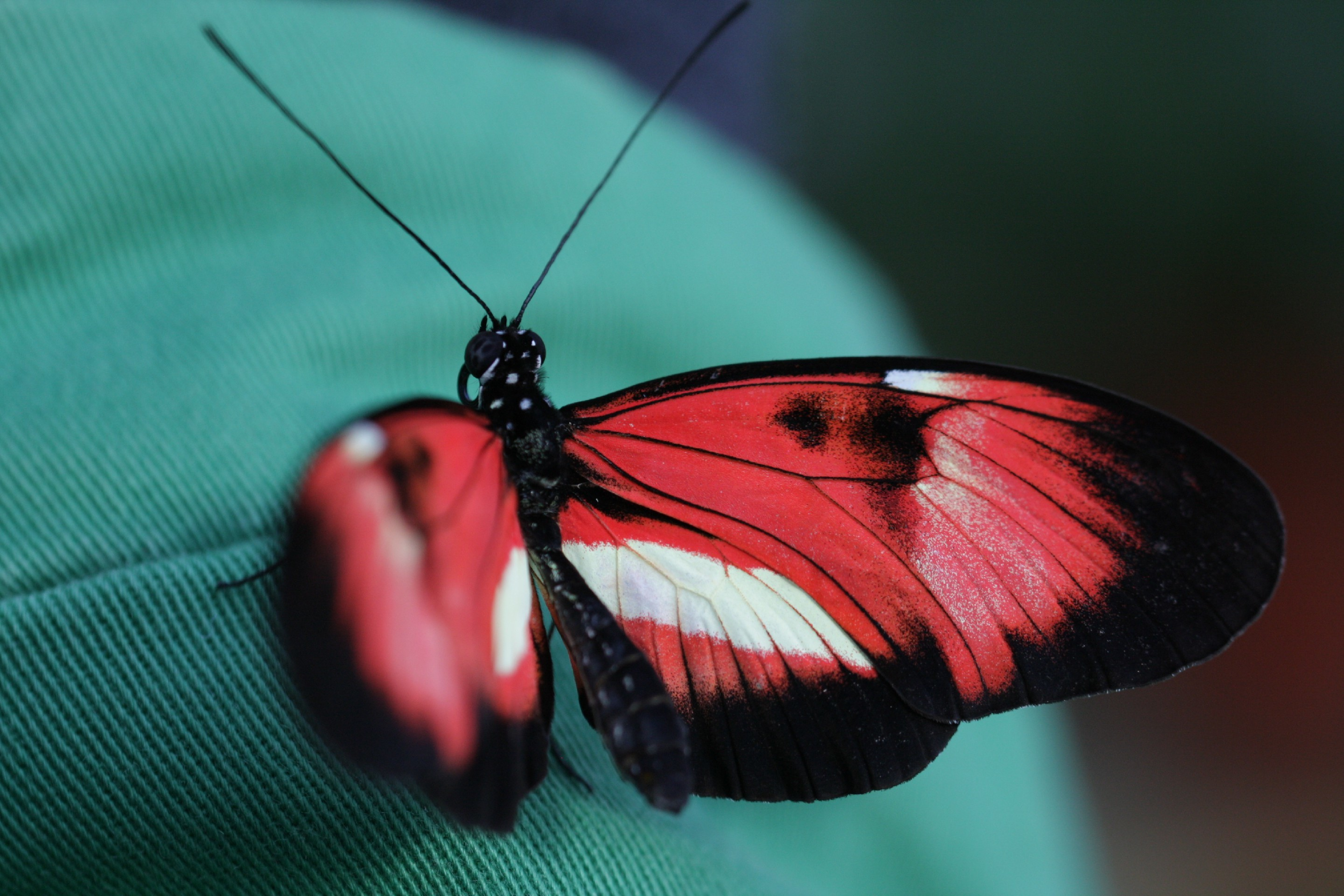 Image: butterfly, beauty, nature