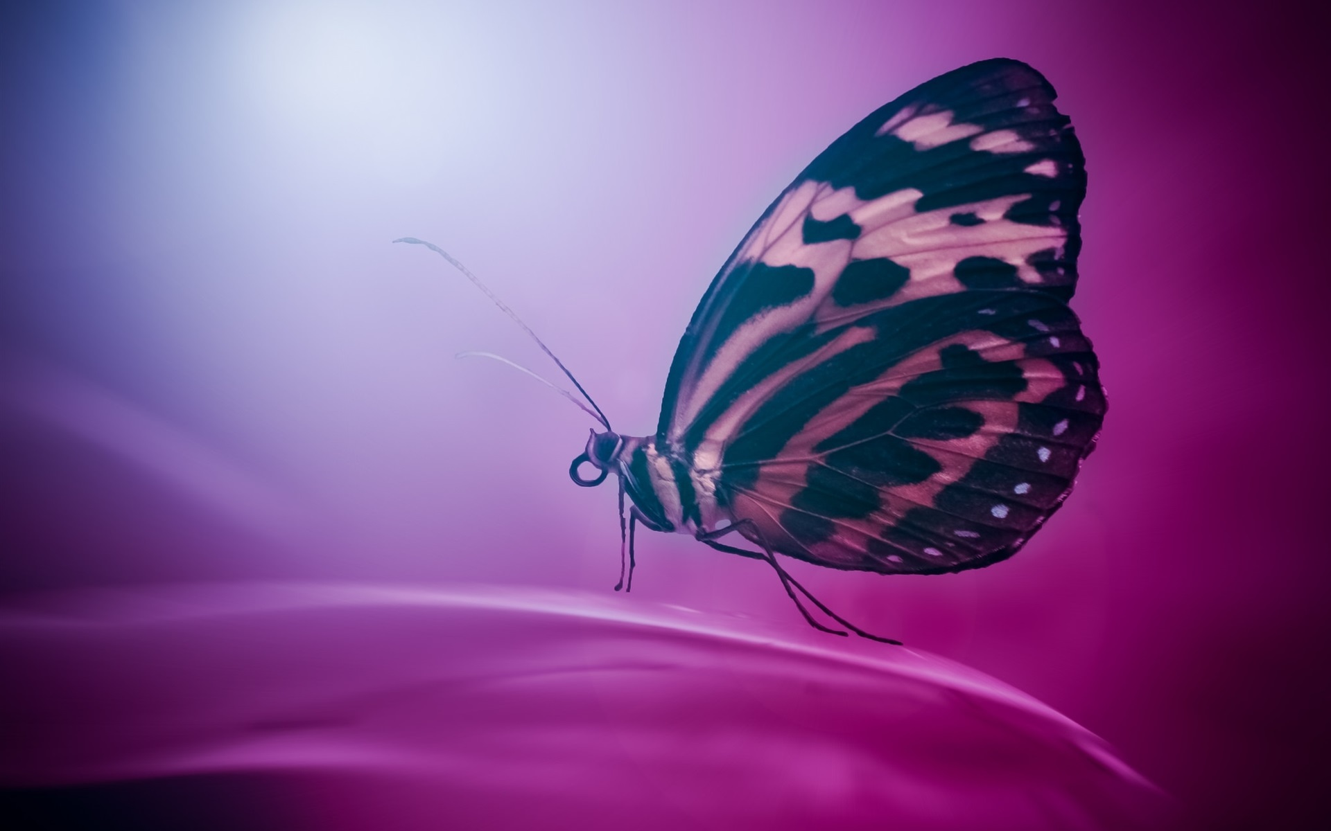 Image: Butterfly, wings, sitting, flower, color, purple