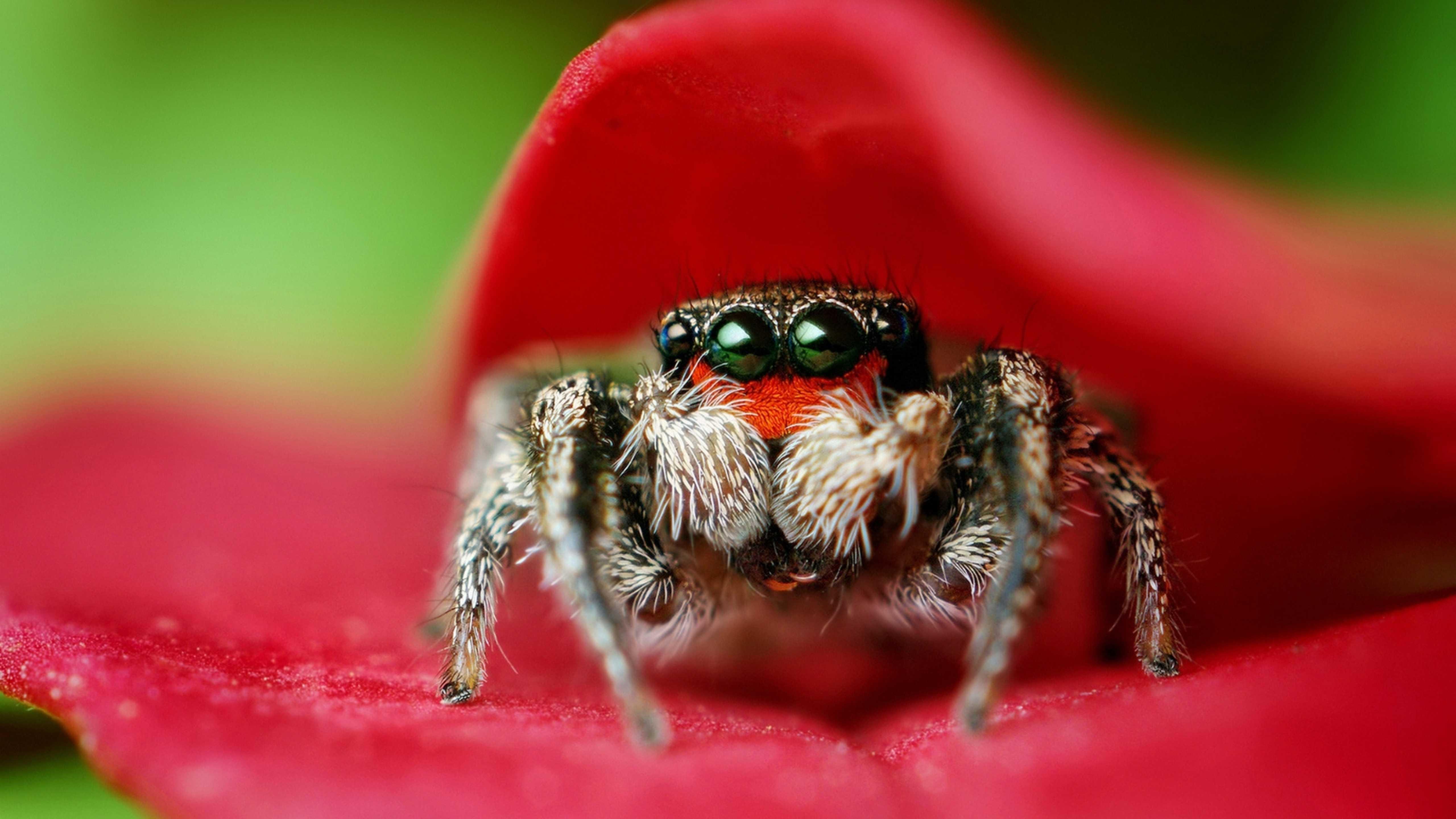 Image: Spider, close-up, macro