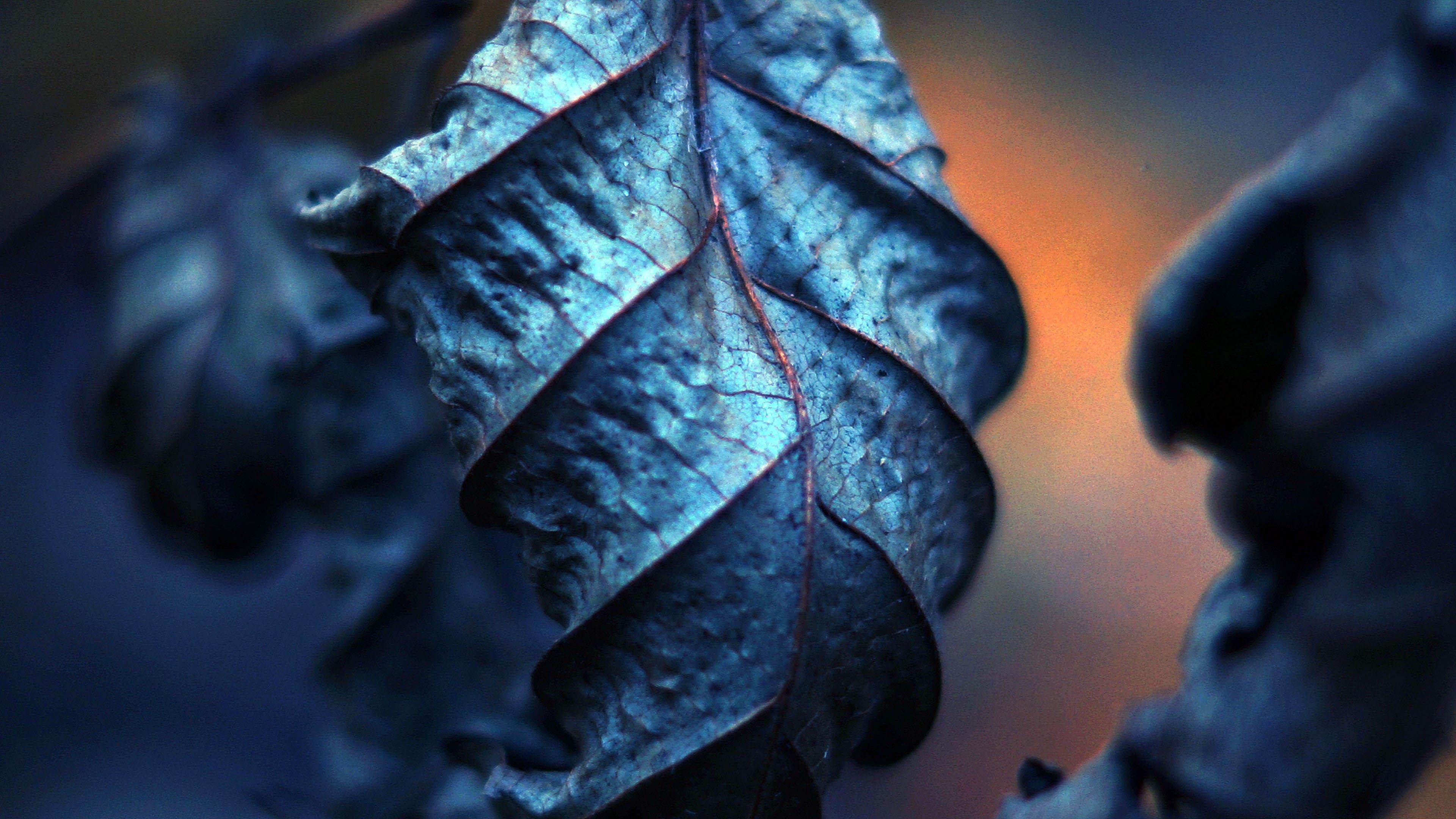 Картинка: Сухой лист, листья, прожилки, крупный план