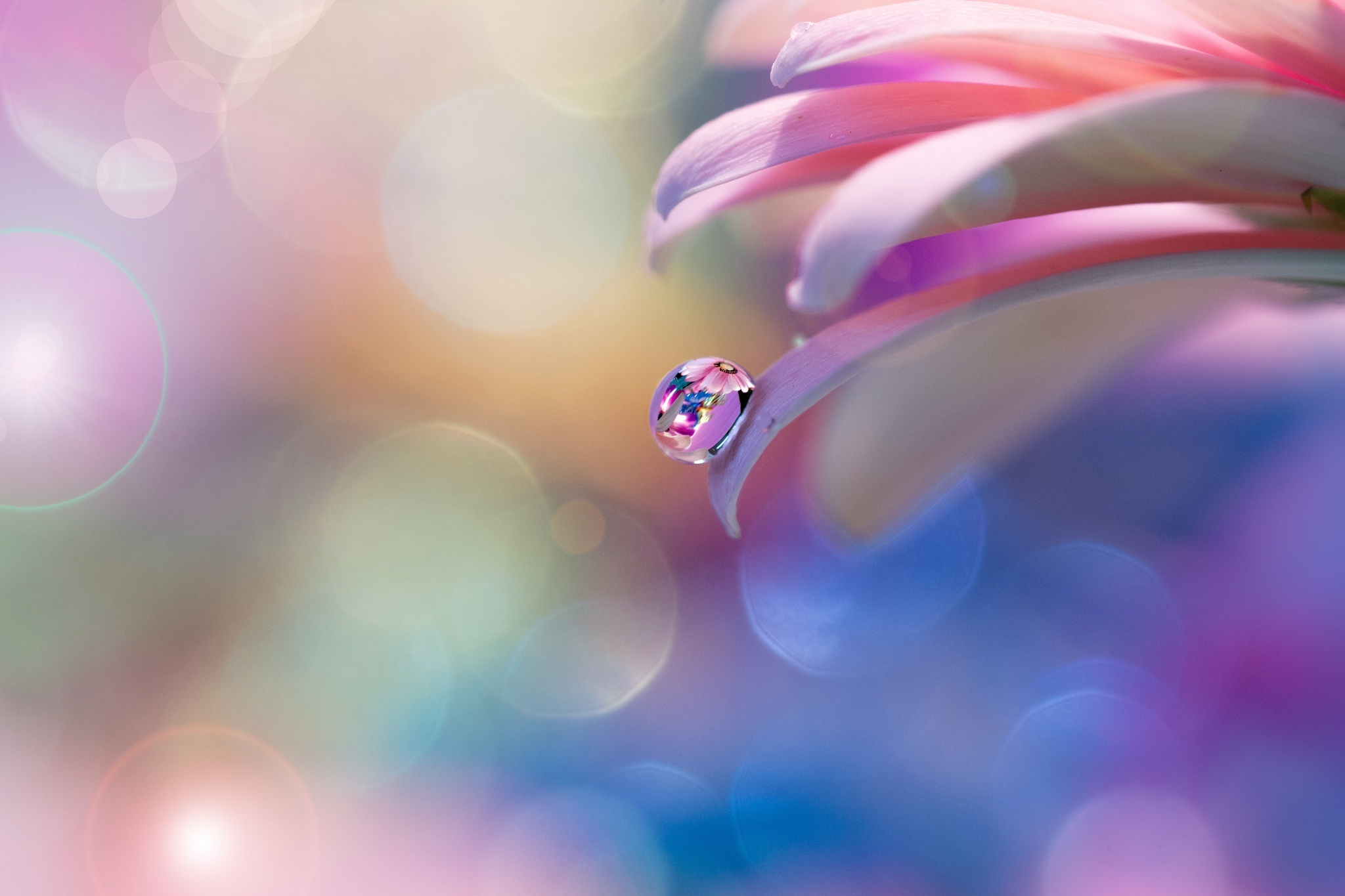 Картинка: Капля, вода, отражение, роса, цветок, блики, цвета
