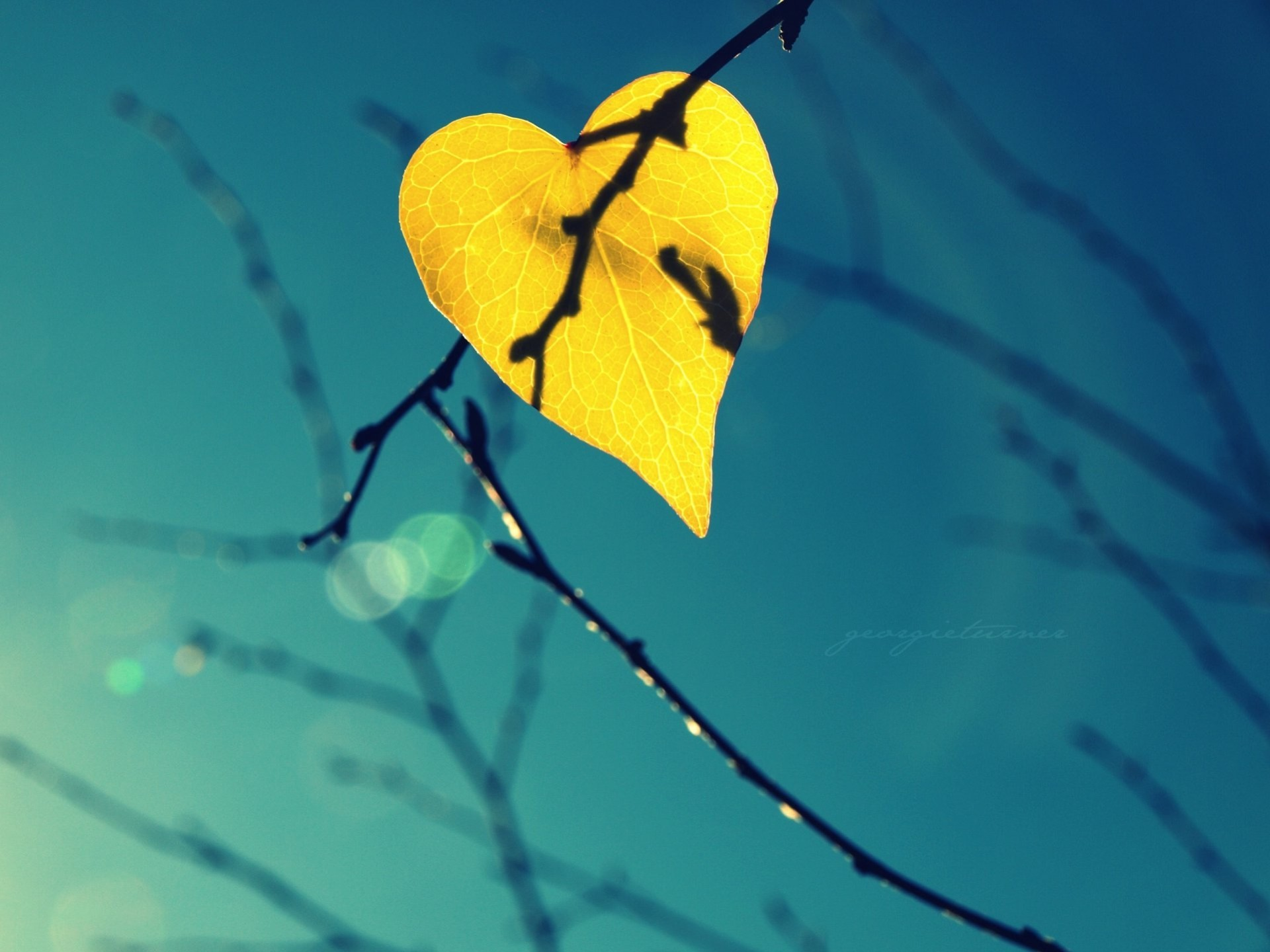 Image: Sheet, yellow, branches, fall, form, heart, heaven, bokeh, close-up, background