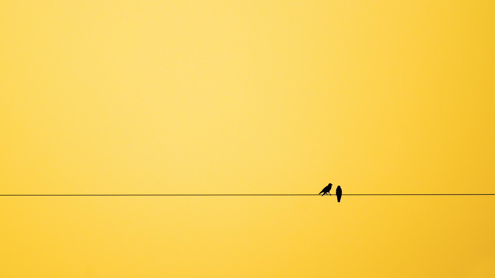 Картинка: Линия, провод, птицы, пара, жёлтый фон