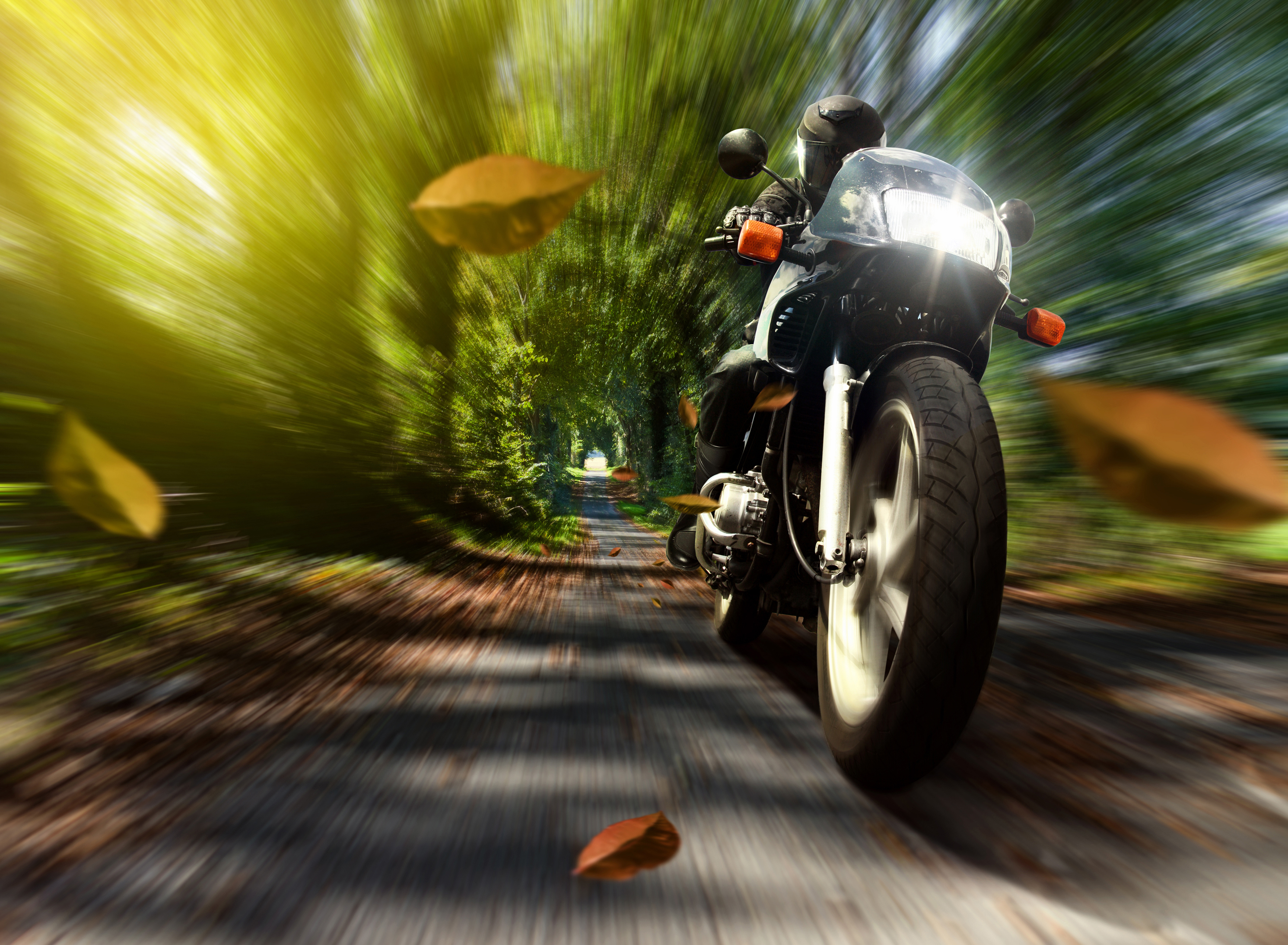 Image: Motorcycle, bike, racer, speed, foliage, trees, trail, headlight, light, blur