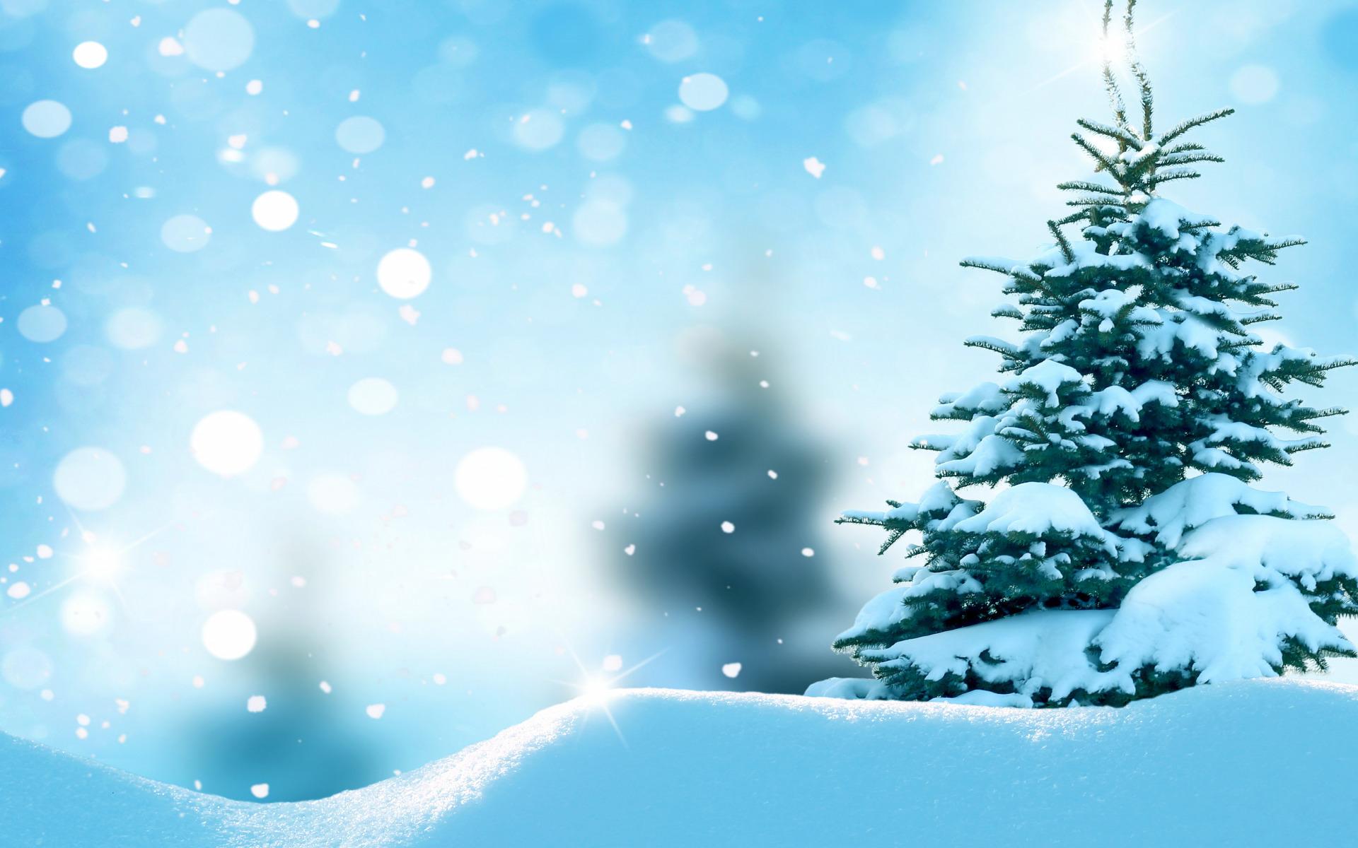 Картинка: Зима, снег, лес, ёлка, боке