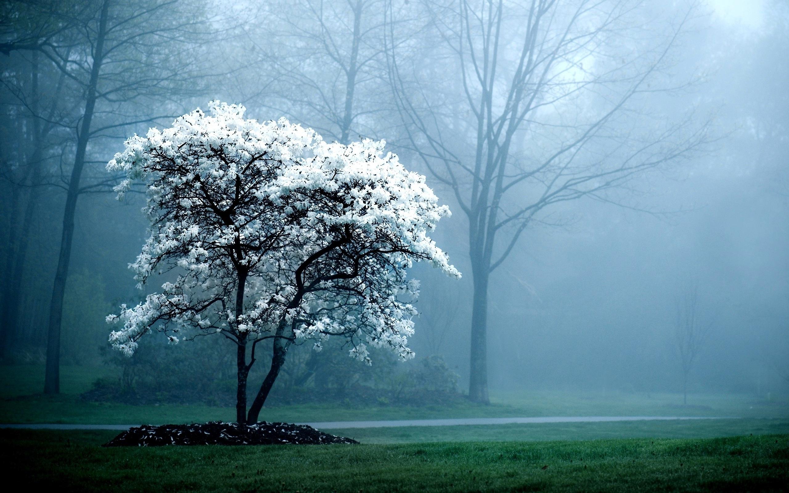 Картинка: Дерево, лес, туман, дорога, деревья, природа