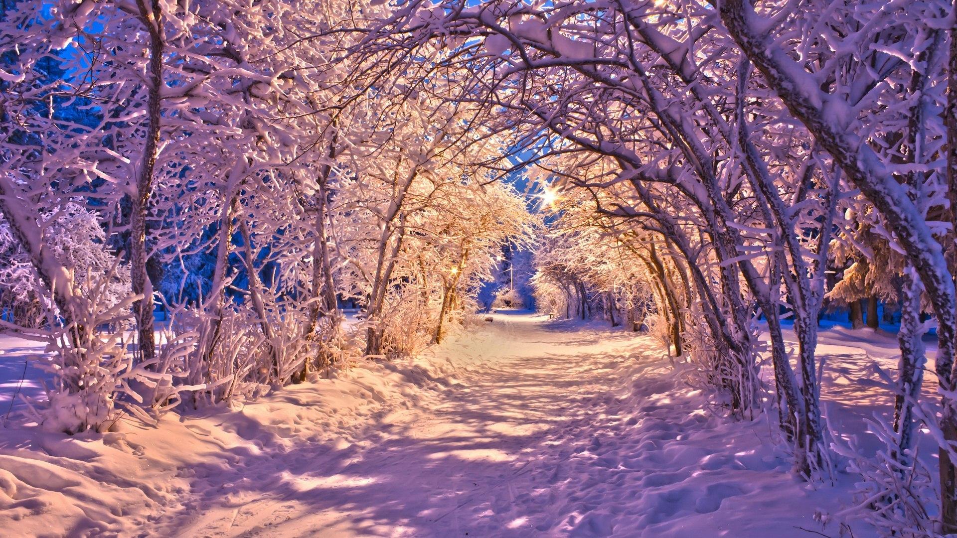 Картинка: Зима, снег, лес, тень, дорожка, вечер