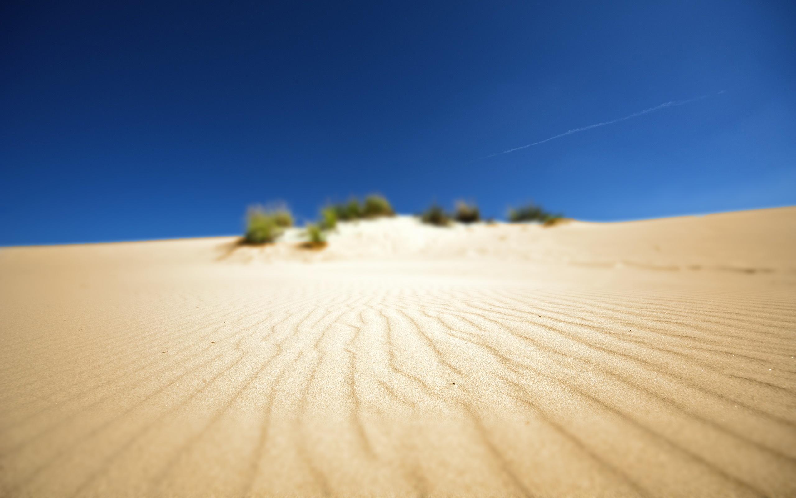 Картинка: Пустыня, небо, песок, рябь, волны, кусты, растительность, фокус