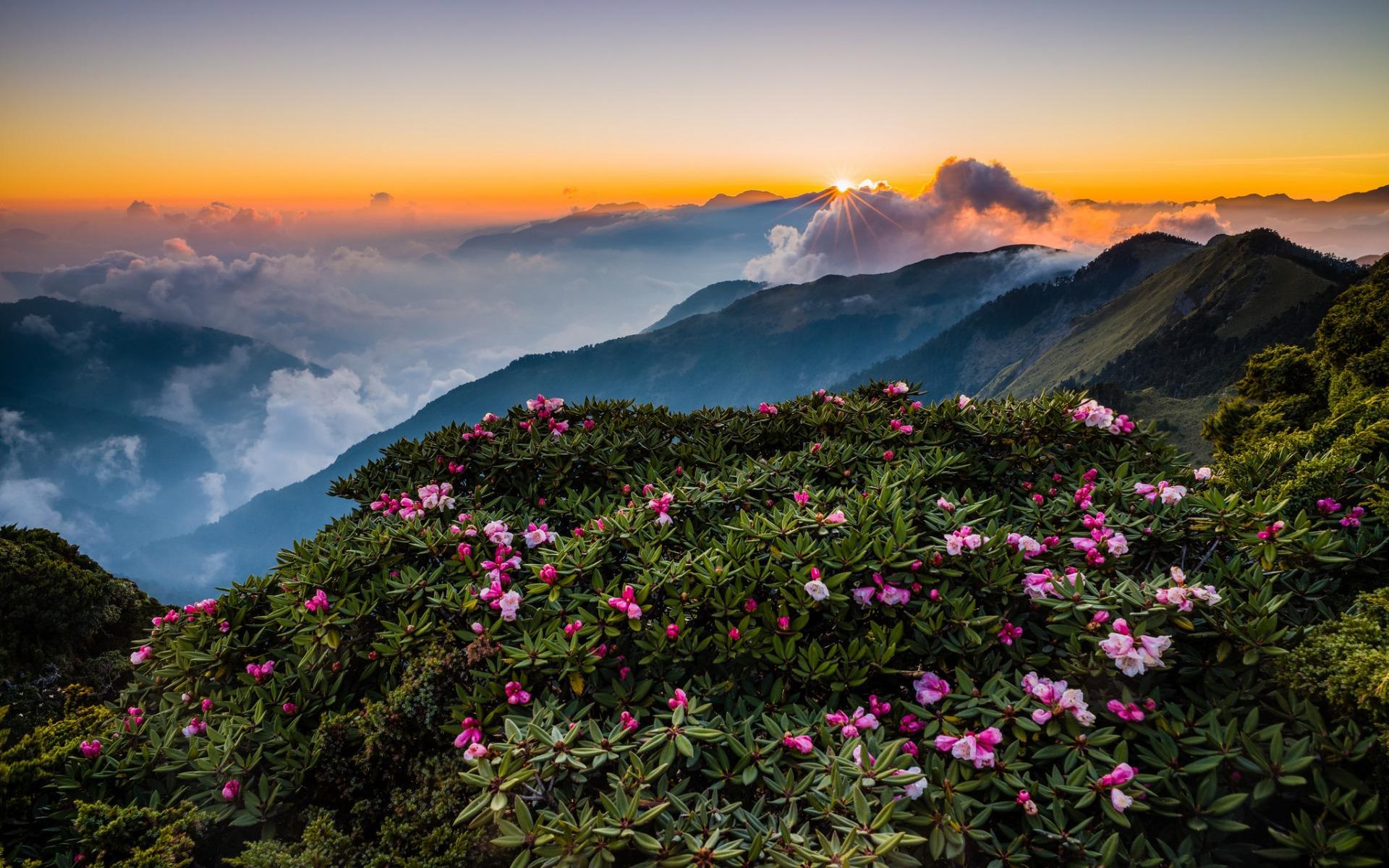 Картинка: Склон, небо, холм, горы, цветы, зелень, облака, закат