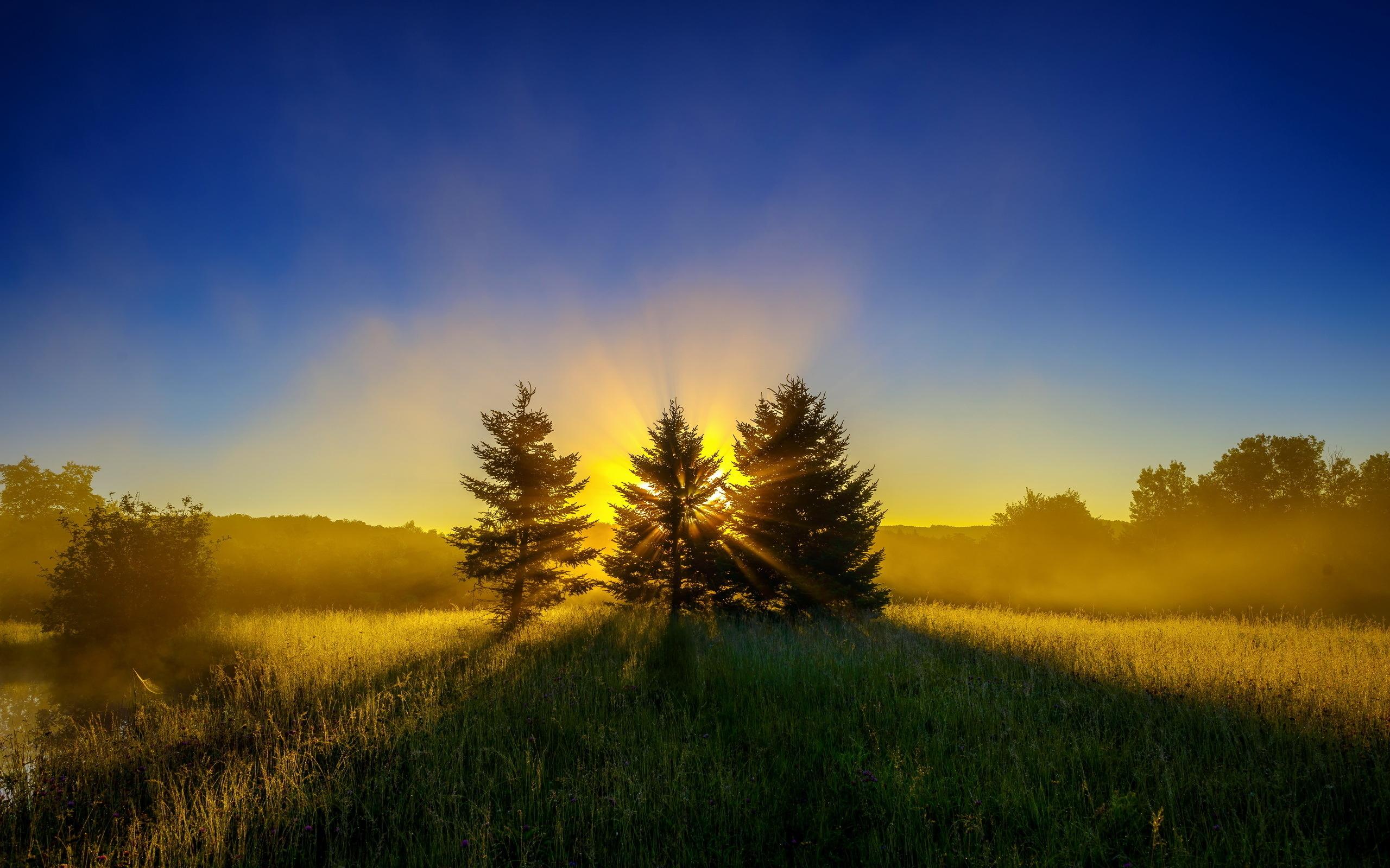 Картинка: Лето, ёлочки, три, хвоя, лес, трава, поле, горизонт, вечер, закат, тень