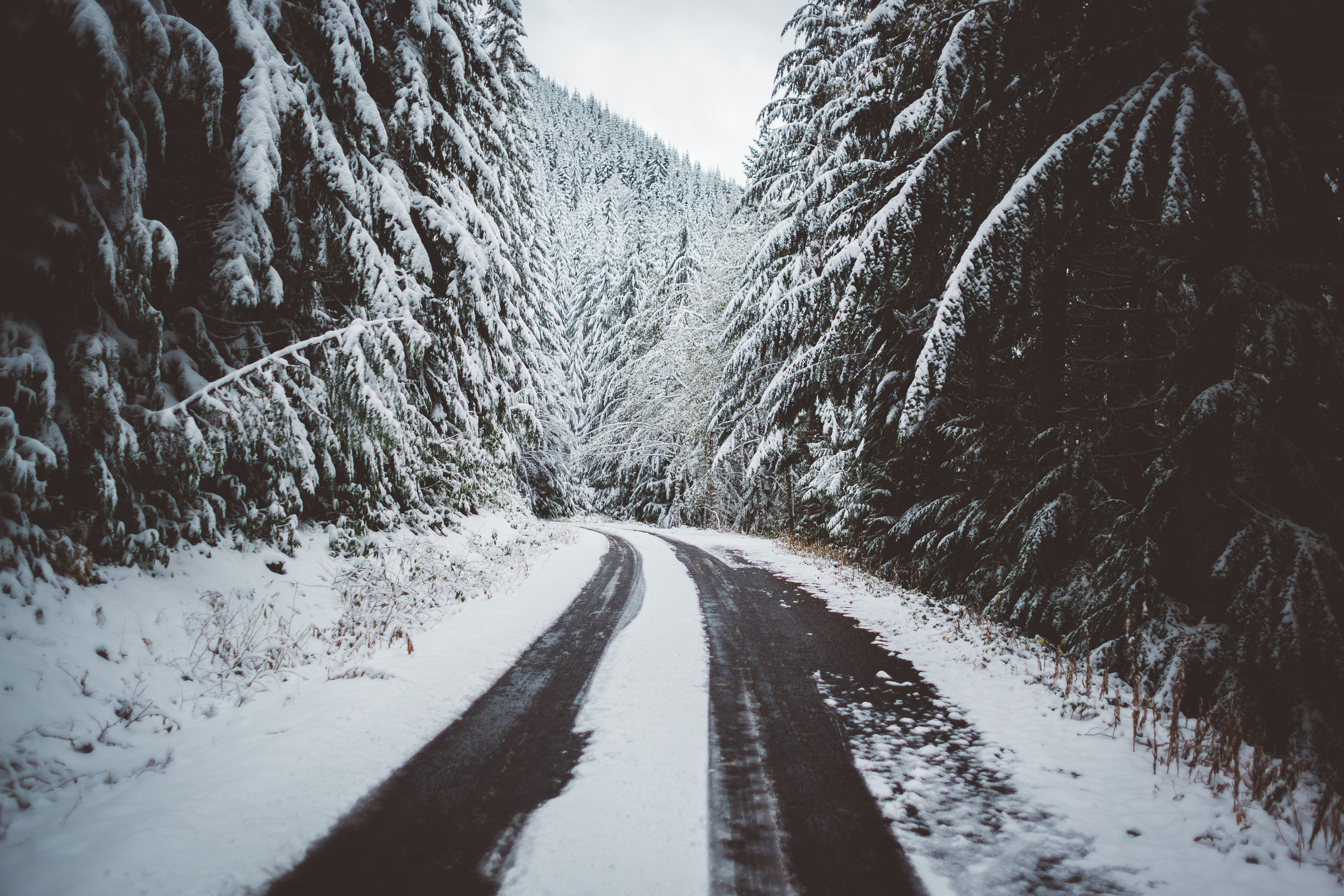 Image: Winter, forest, road, footprints, snow, landscape, nature, trees