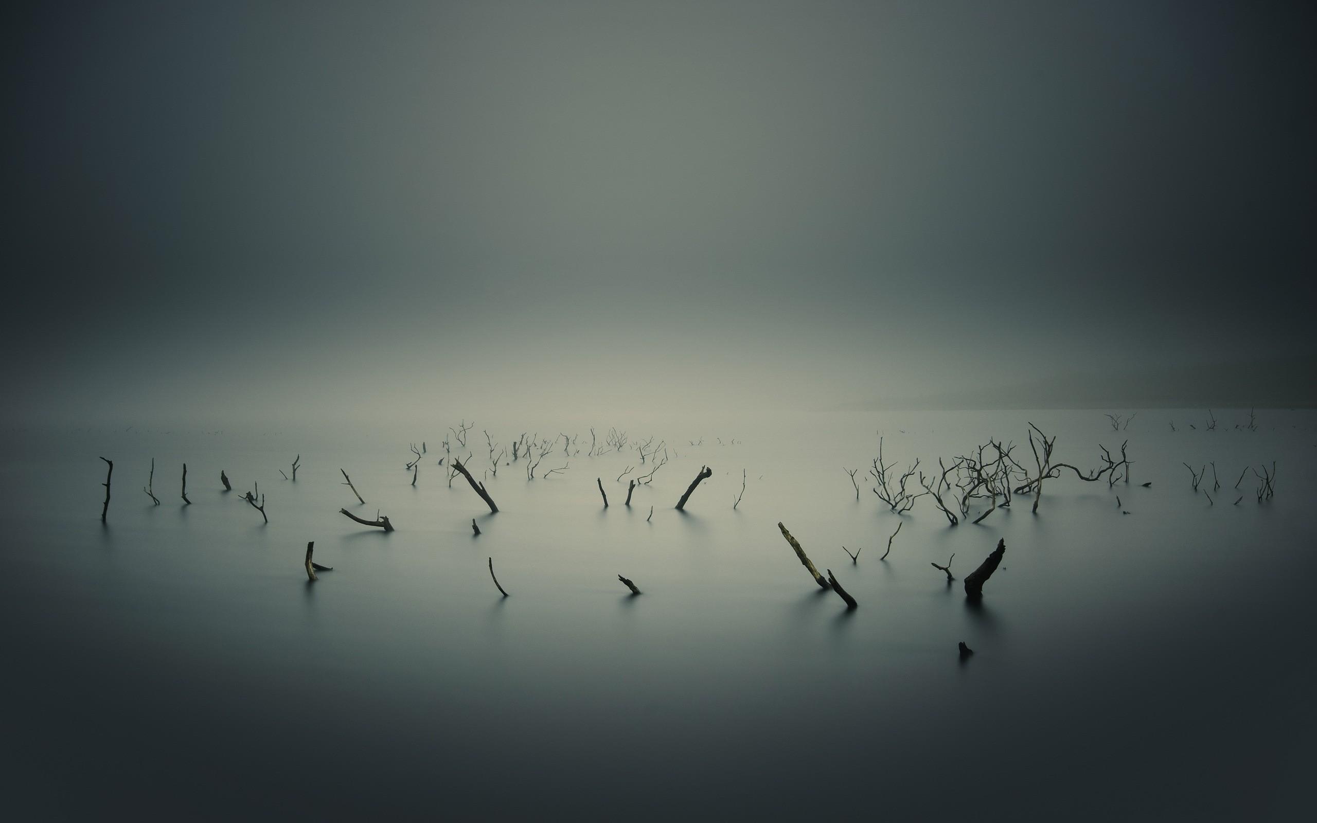 Картинка: Болото, туман, ветки, озеро, вода, корни