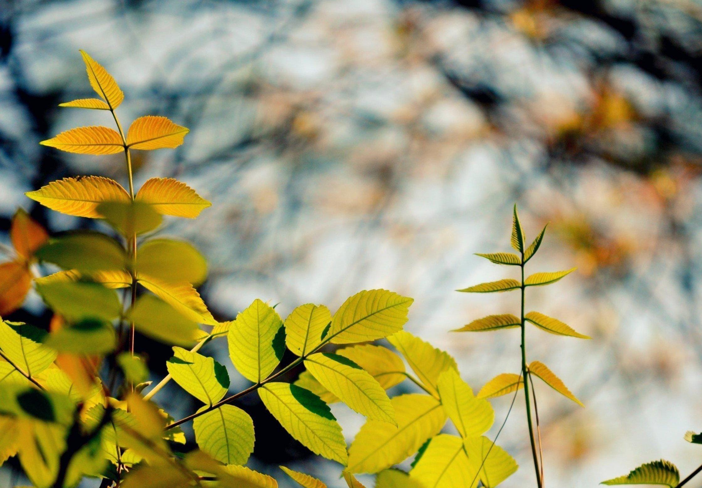 Картинка: Листья, ветки, размытый фон