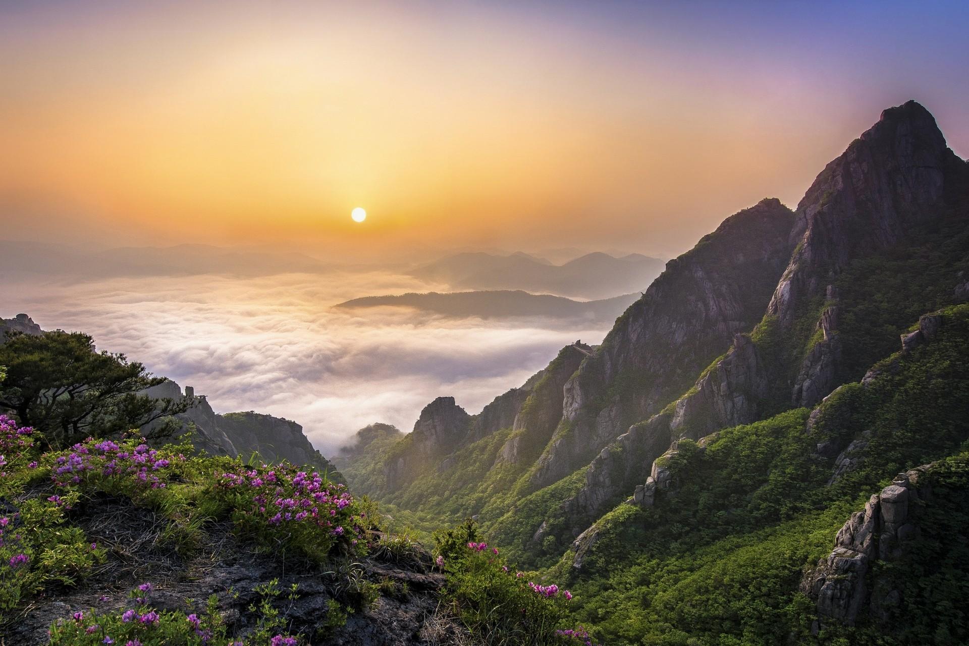 Картинка: горы, туман, облака, небо, цветы, холмы, травы