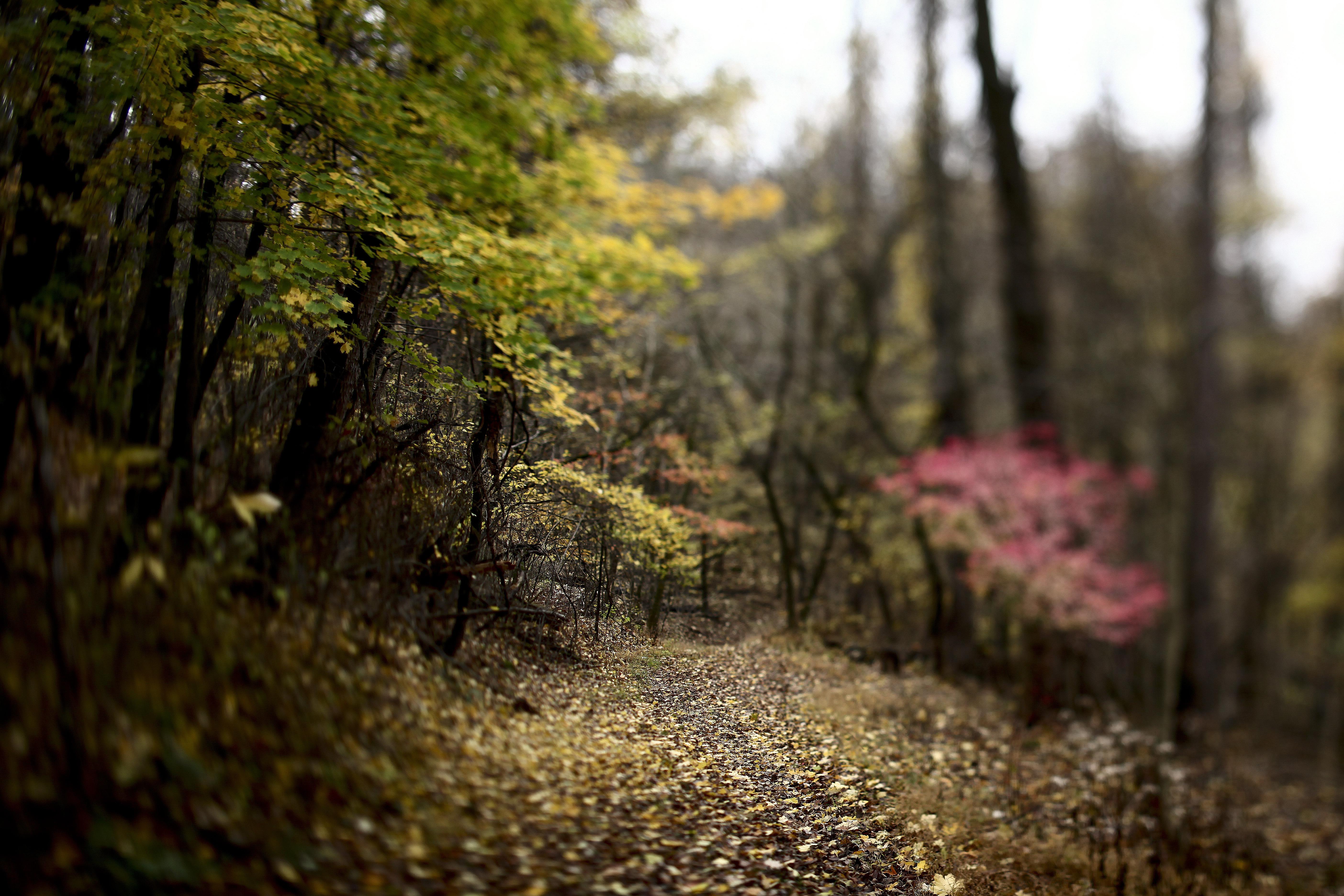 Картинка: Лес, деревья, листья, осень, тропа, дорожка, размытость