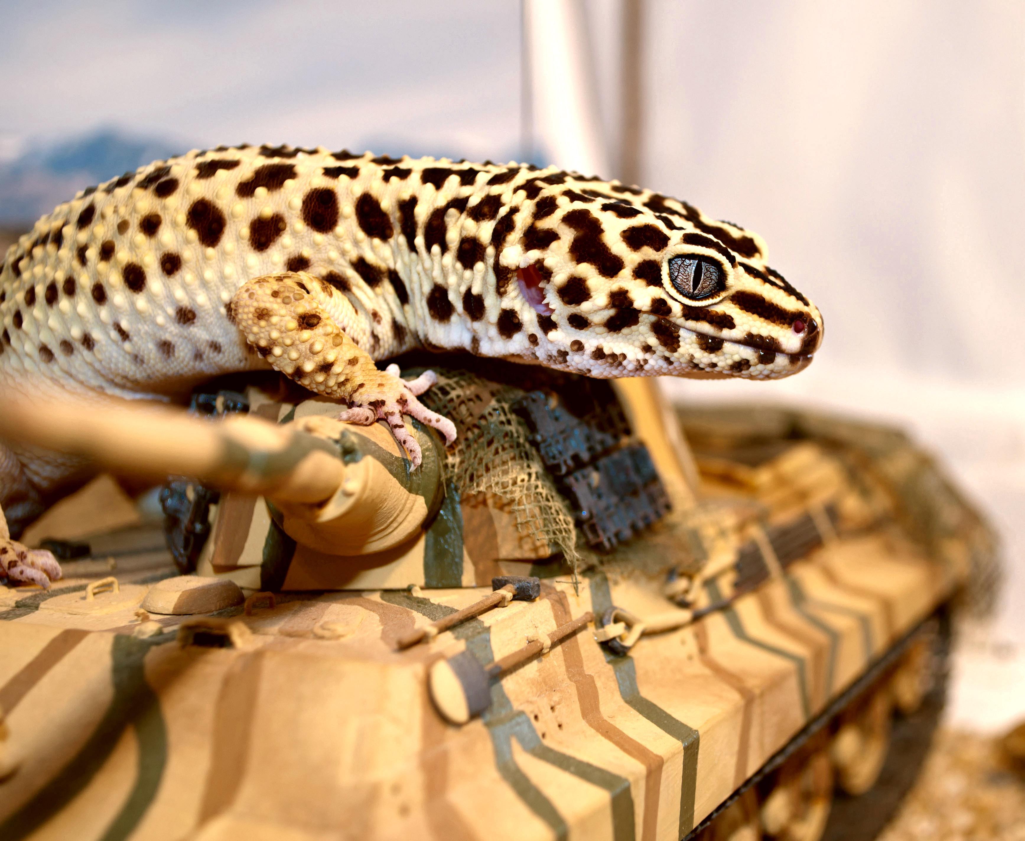 Картинка: Геккон, ящерица, пятна, танк