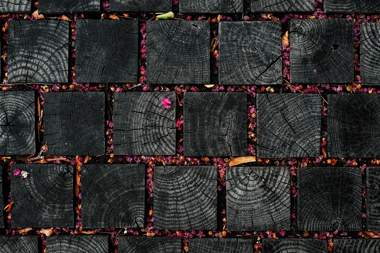Картинка: Дерево, листья, лепестки, квадраты, обожжённые